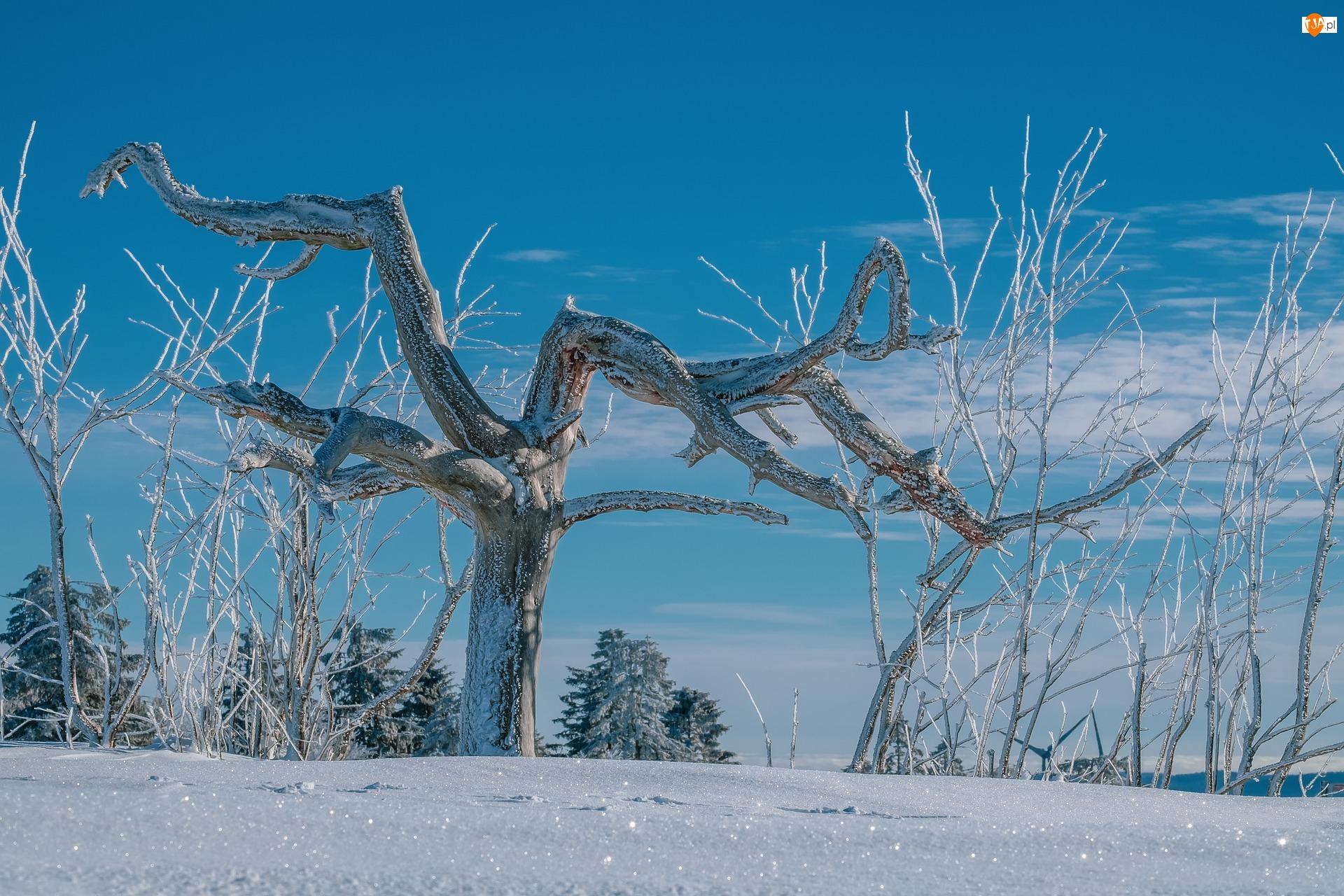 Oszronione, Gałęzie, Śnieg, Zima, Drzewa