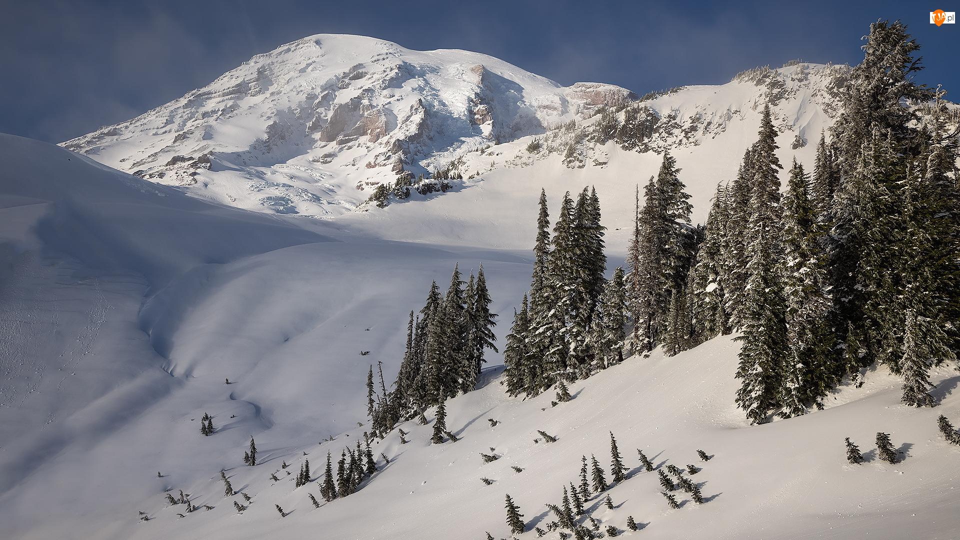 Park Narodowy Mount Rainier, Zima, Mount Rainier, Stan Waszyngton, Góry, Drzewa, Stany Zjednoczone, Stratowulkan