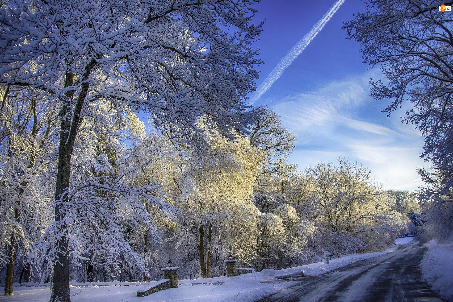 Ośnieżone, Drzewa, Droga, Zima, Gałęzie