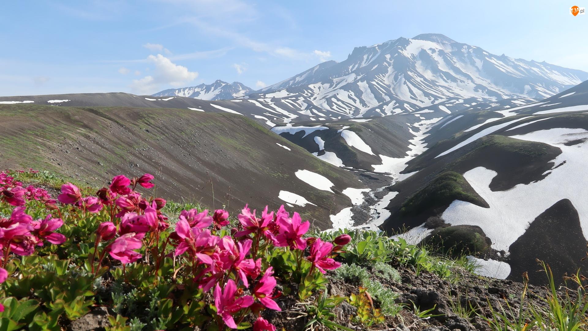 Kwiaty, Góry, Śnieg, Różowe