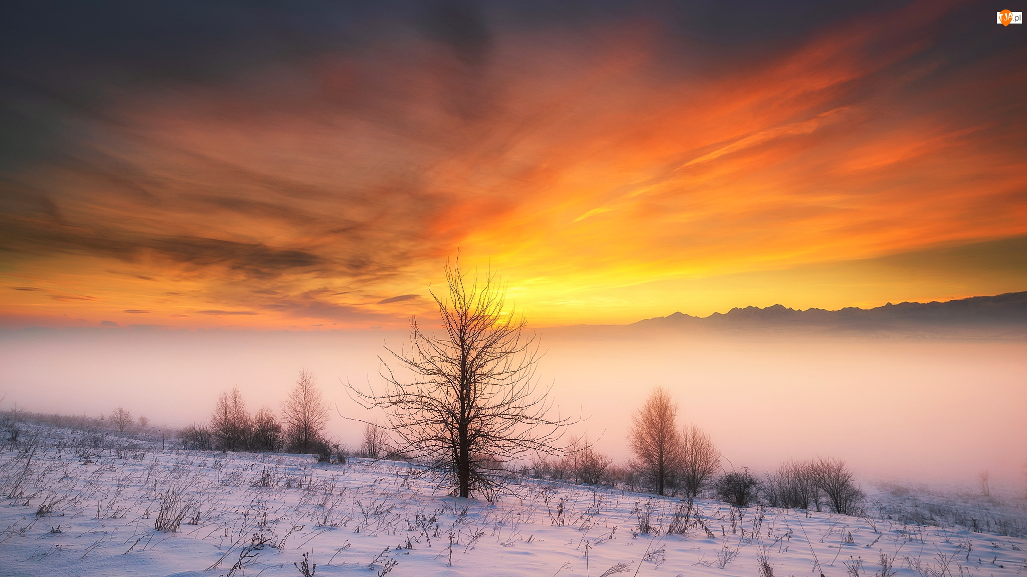 Drzewa, Krzewy, Mgła, Zima, Chmury, Wschód słońca, Góry