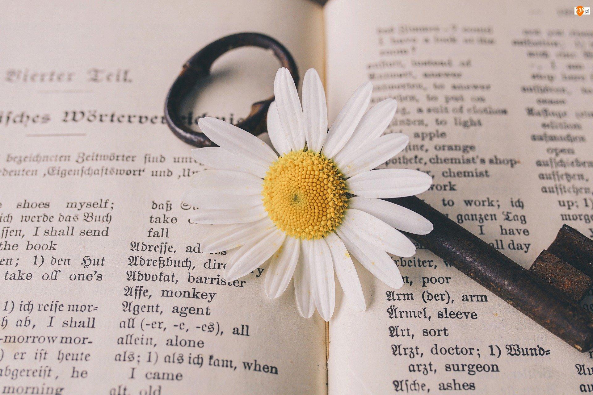 Klucz, Książka, Kwiat, Stokrotka