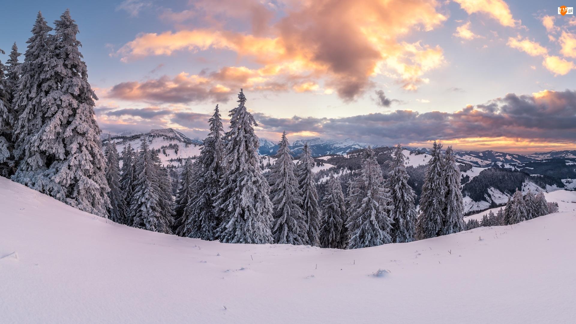 Las, Chmury, Drzewa, Góry, Zima