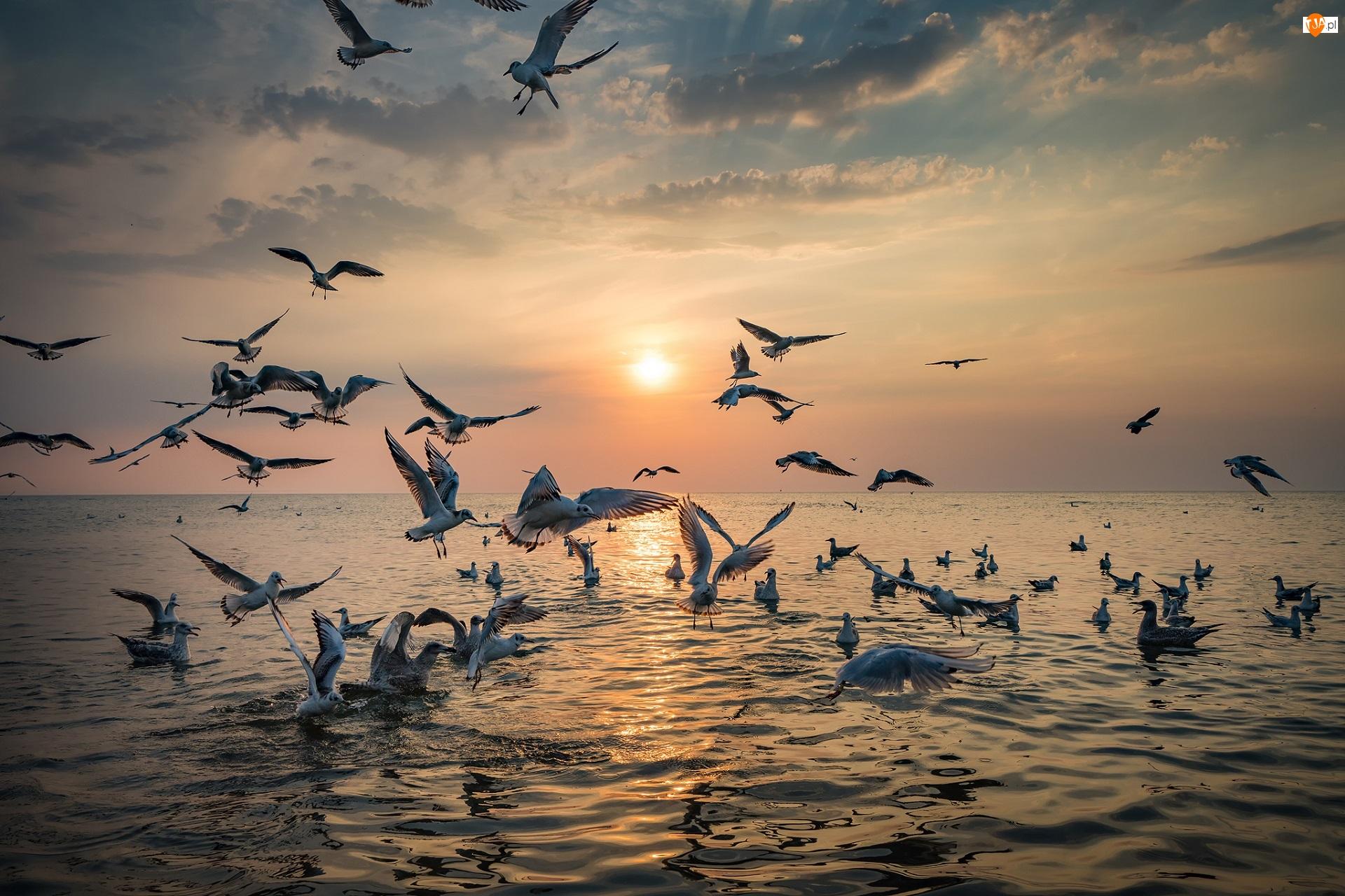 Zachód słońca, Morze, Mewy