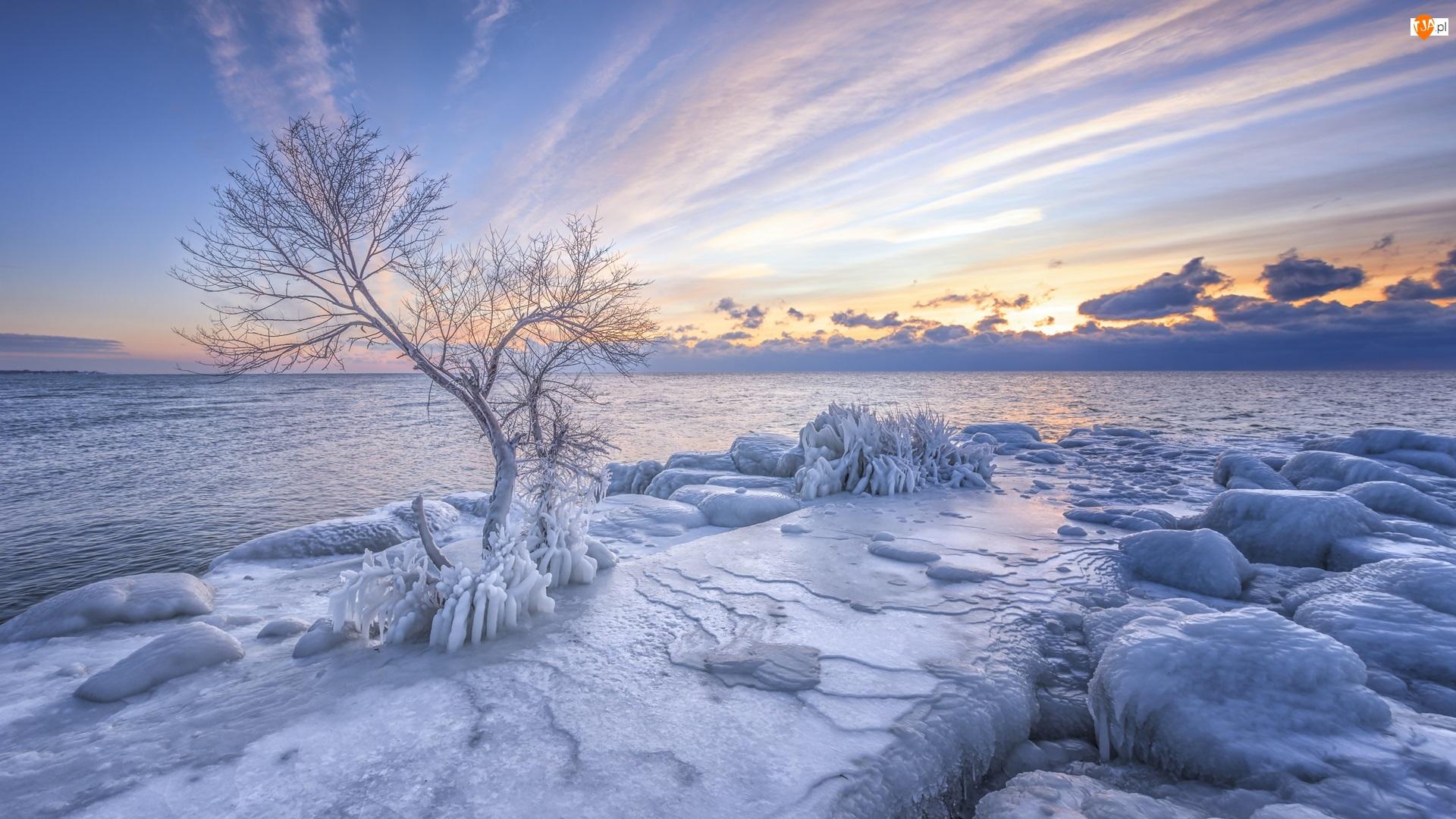 Morze, Brzeg, Wschód słońca, Zima, Chmury, Lód, Drzewo