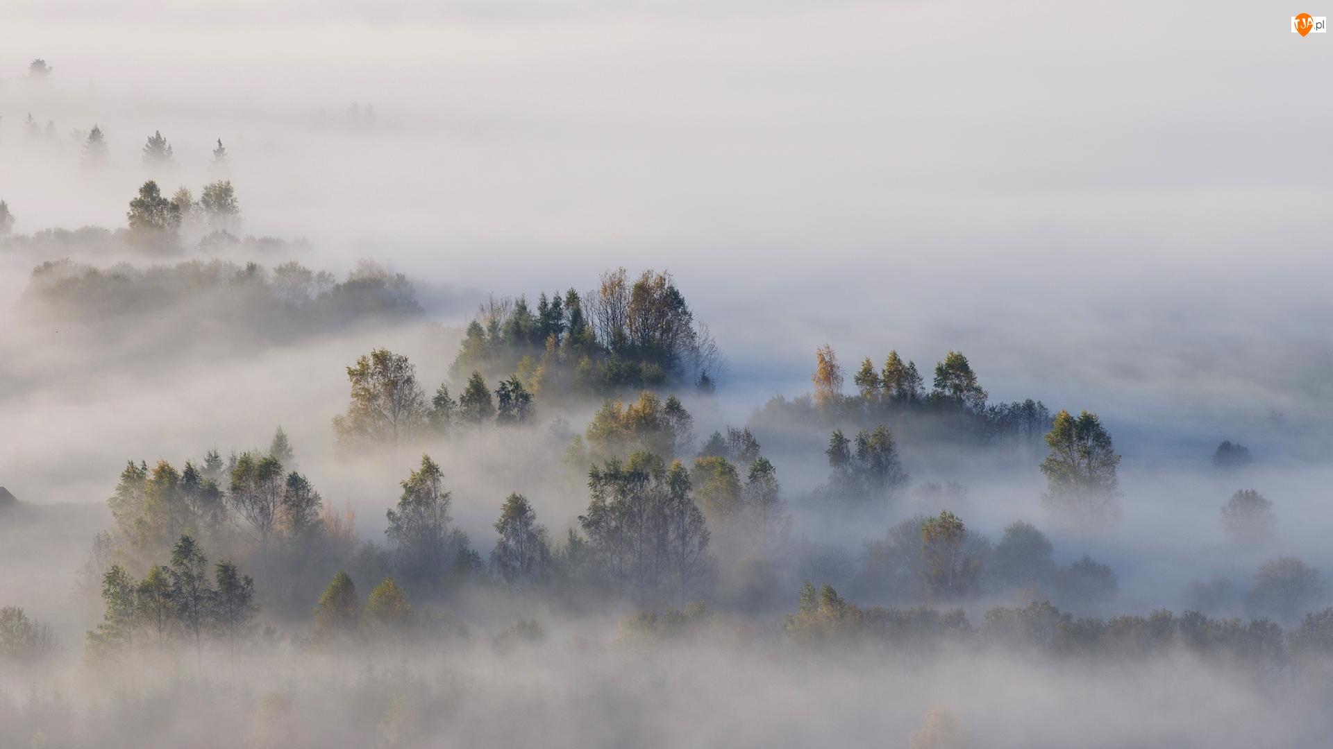 Las, Drzewa, Polska, Jesień, Pieniny, Poranek, Mgła