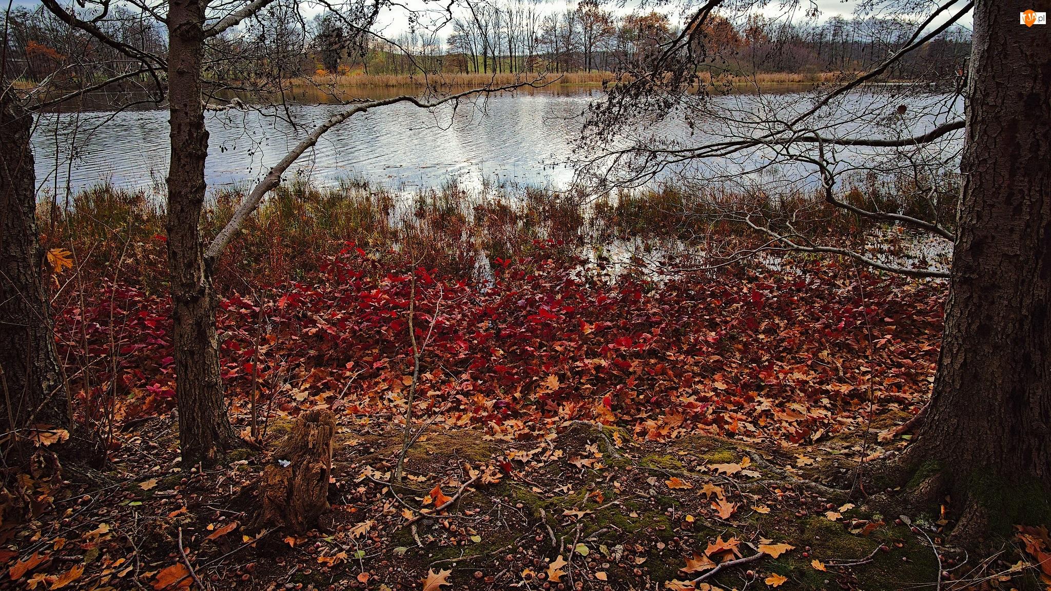 Trawa, Liście, Drzewa, Rzeka, Kolorowe