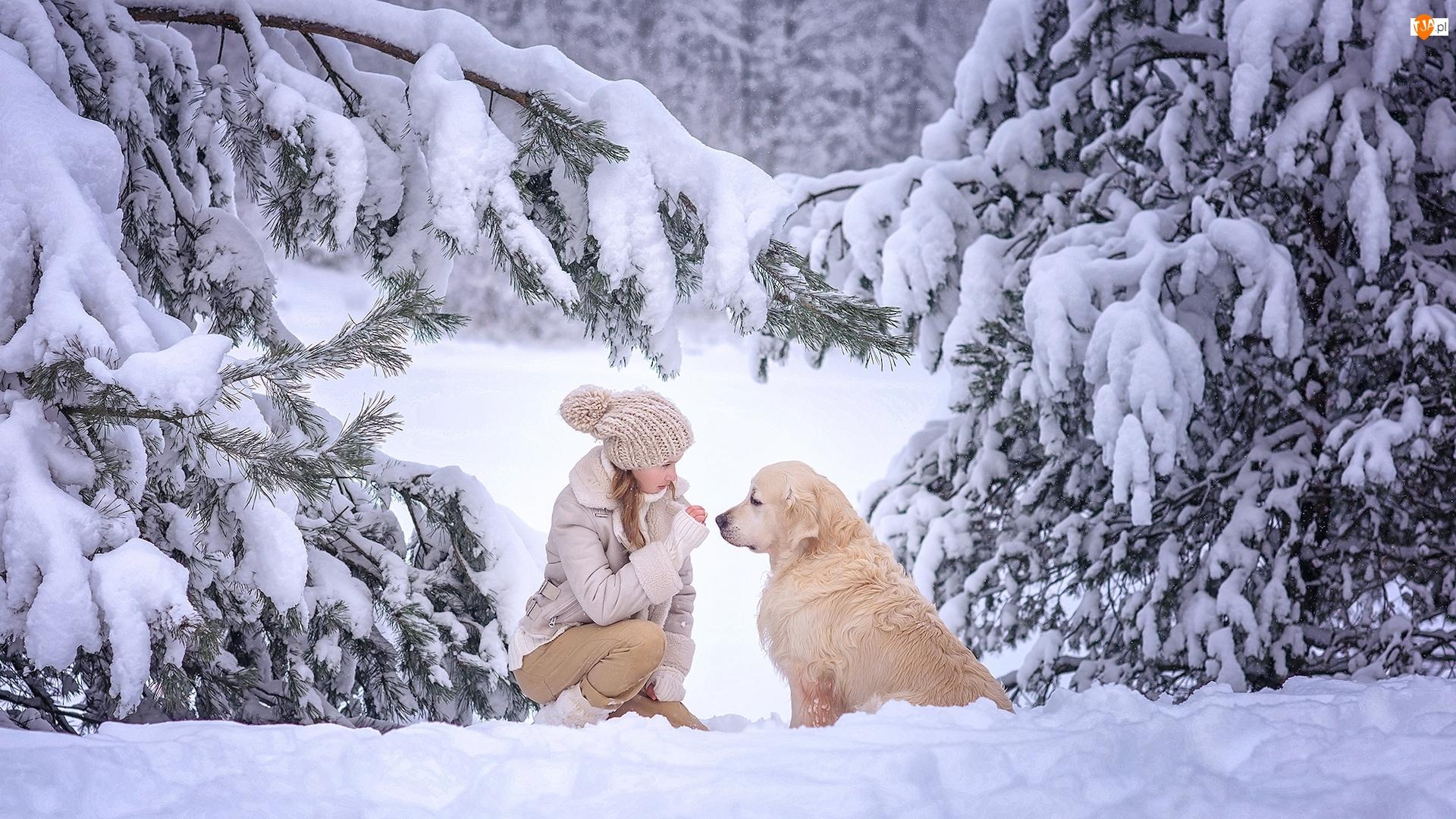 Pies, Dziewczynka, Zima, Drzewa, Golden retriever, Ośnieżone