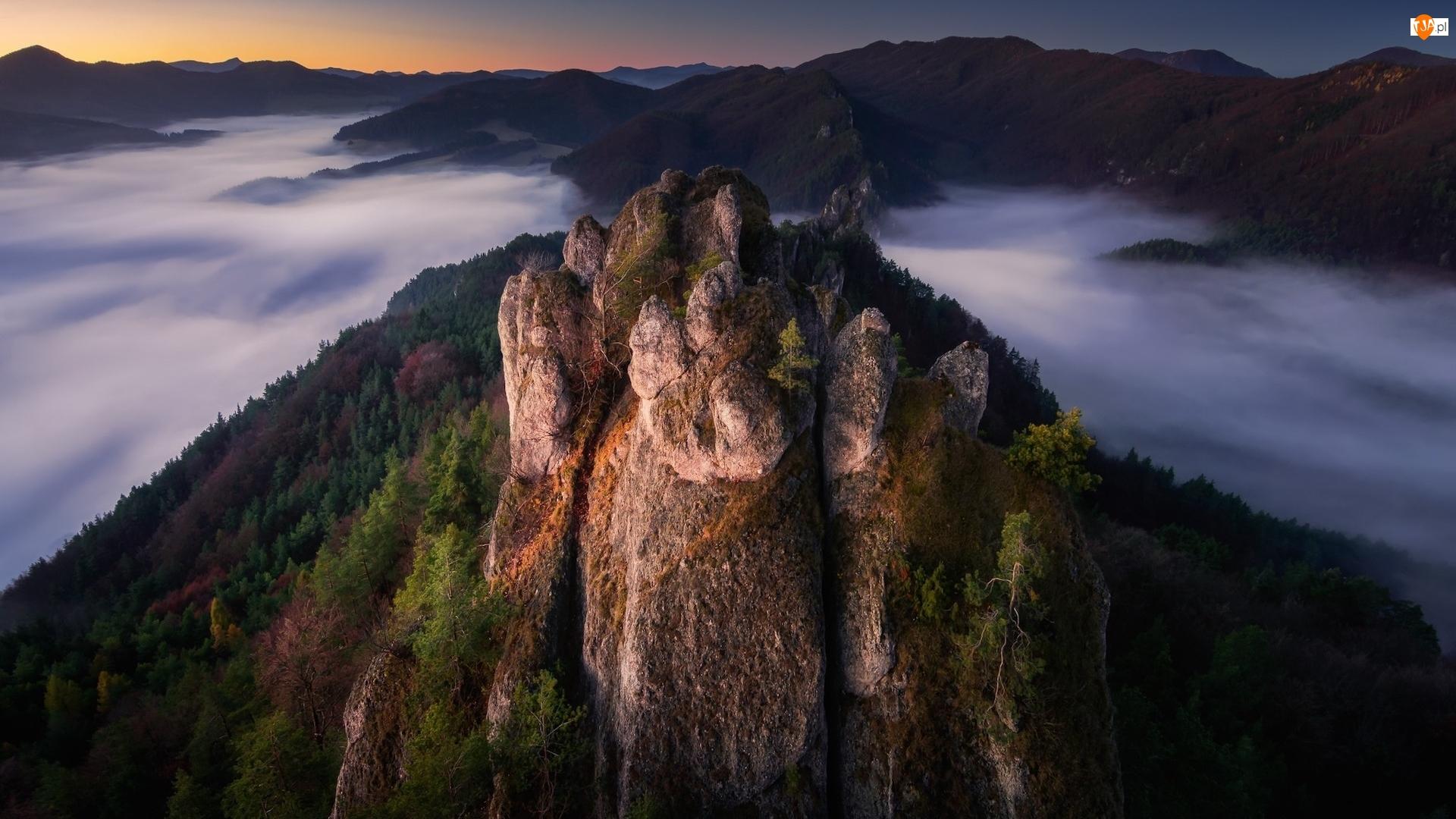 Roślinność, Góry, Skały, Mgła
