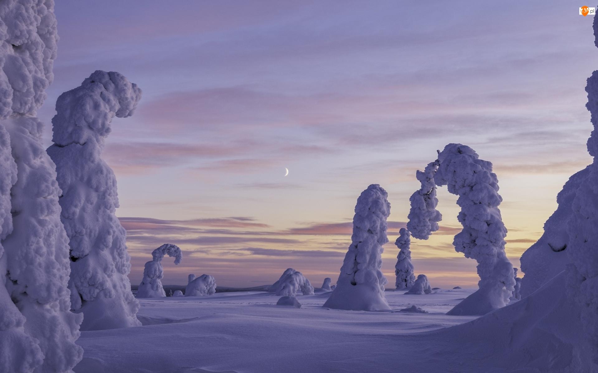 Księżyc, Zima, Ośnieżone, Drzewa