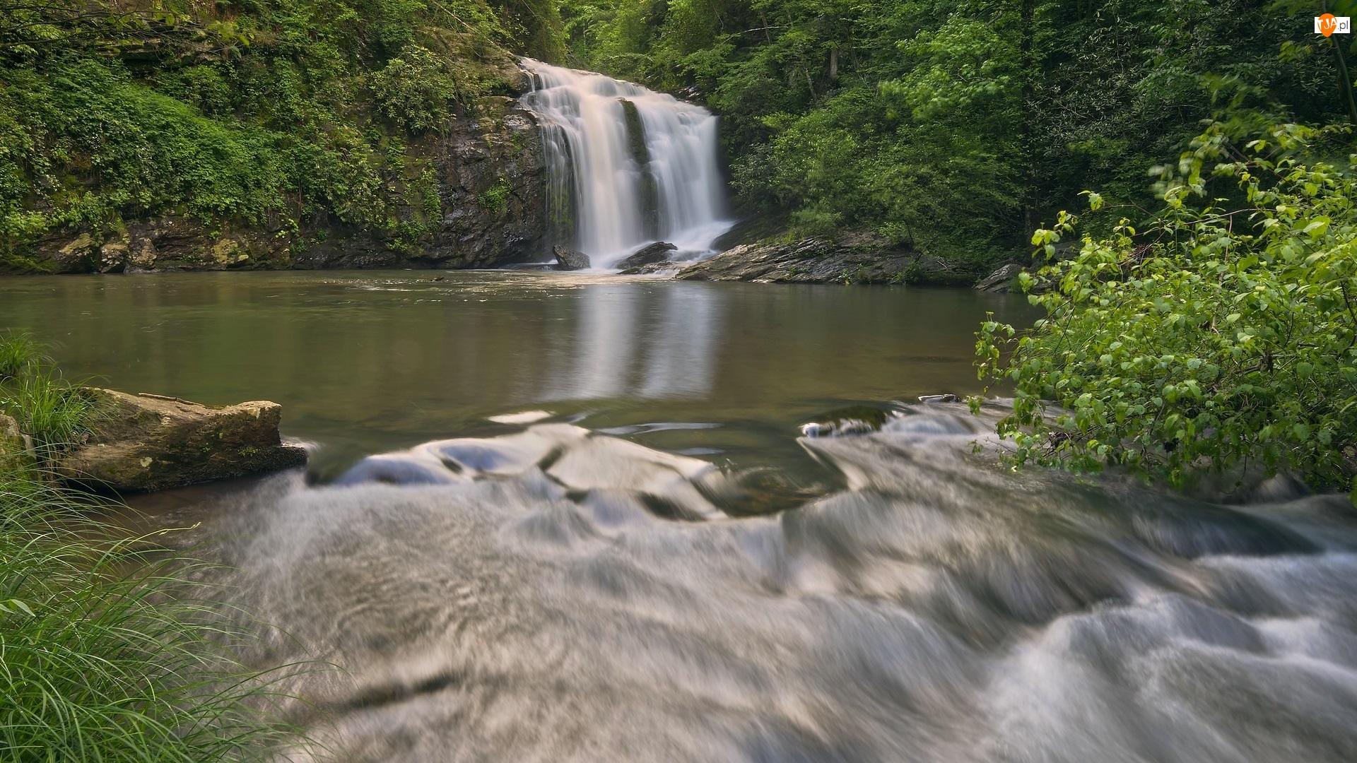 Trawa, Wodospad, Rzeka, Krzewy