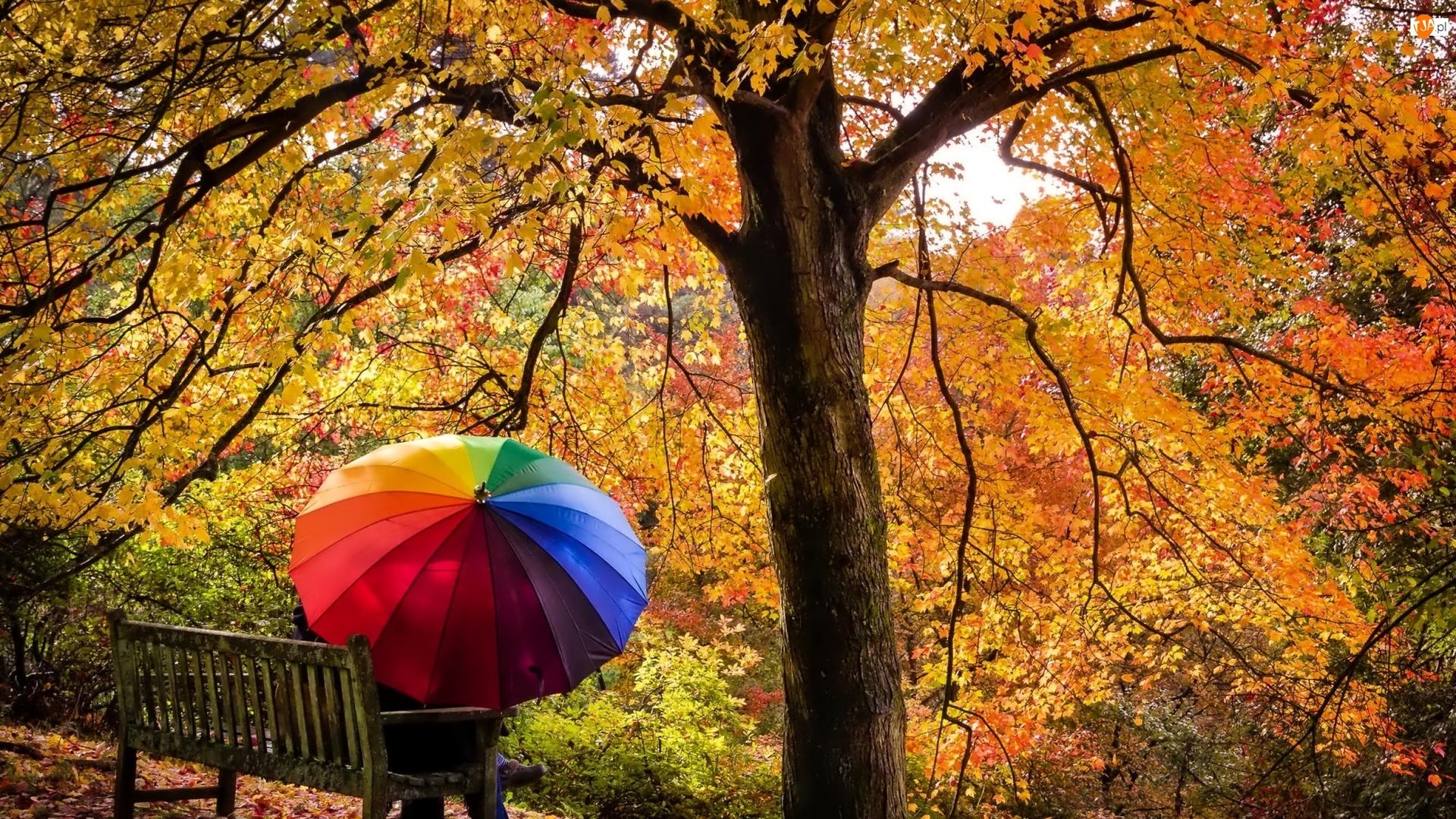 Ławka, Para, Parasolka, Jesień, Kolorowa, Drzewa