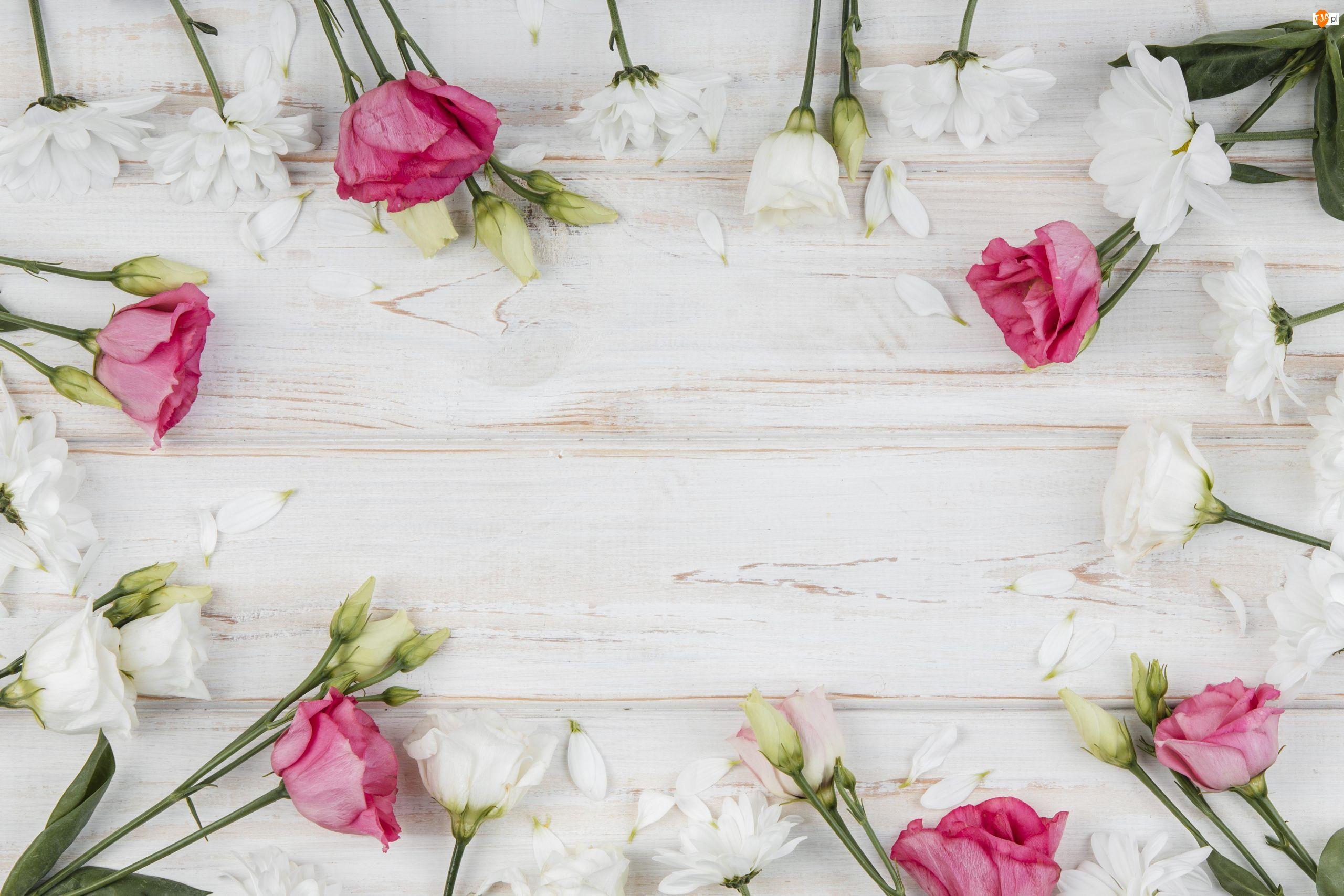Różowe, Deski, Białe, Kwiaty, Eustomy
