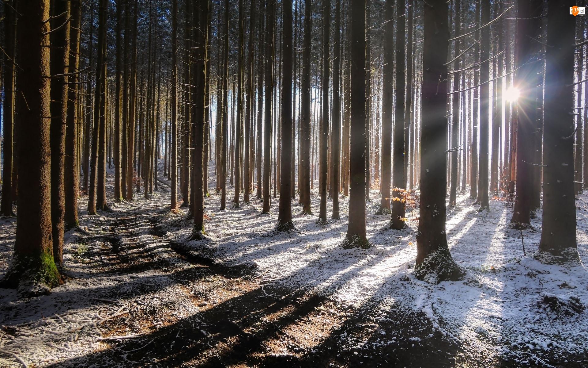 Droga, Las, Drzewa, Zima, Pnie, Promienie słońca