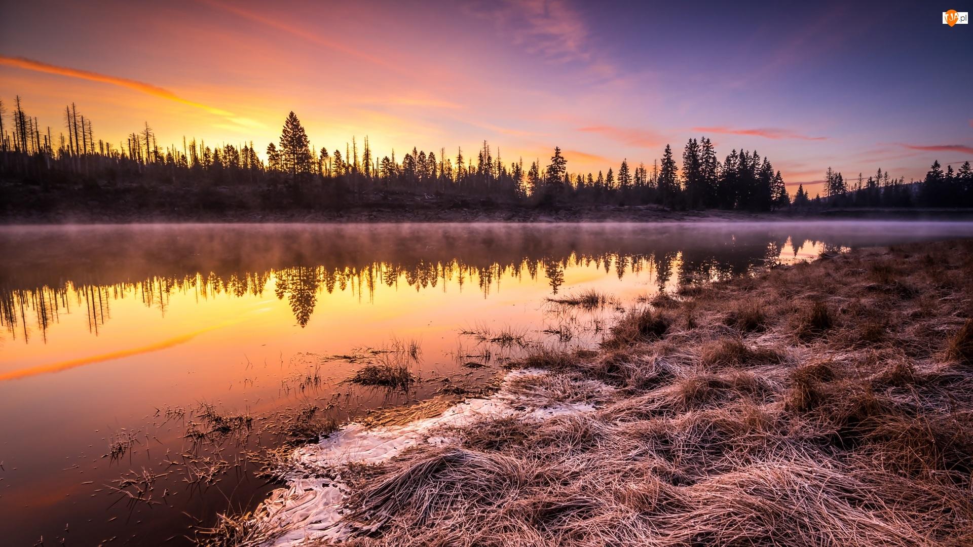 Drzewa, Wschód słońca, Trawa, Rzeka, Mgła