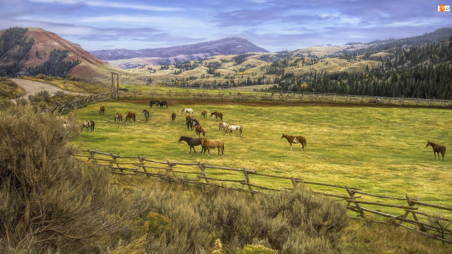 Hrabstwo Teton, Farma, Konie, Stan Wyoming, Pastwisko, Góry, Stany Zjednoczone, Red Hills Ranch