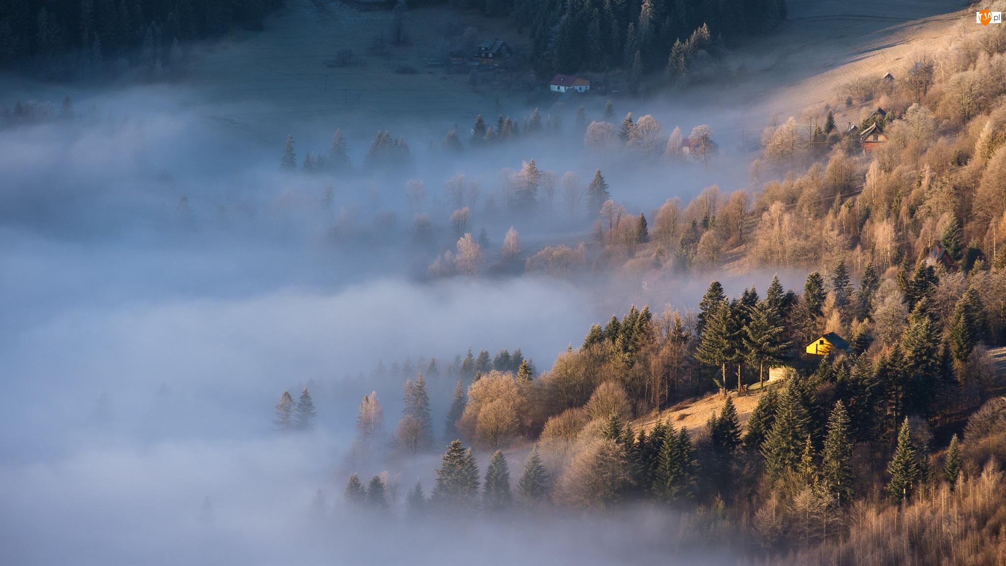 Mgła, Stok, Drzewa, Domy
