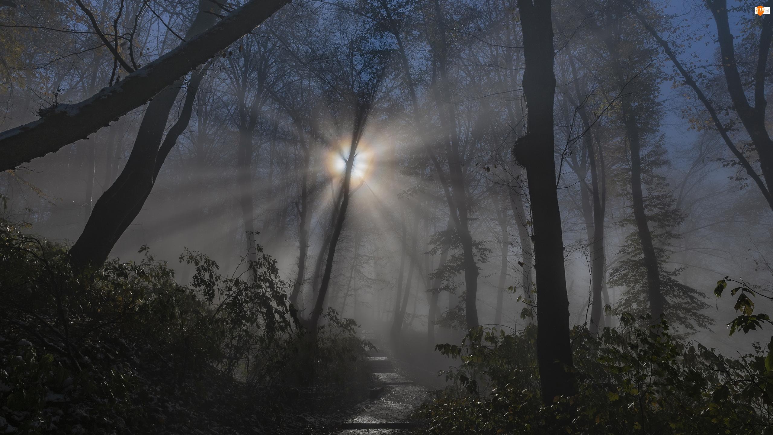 Drzewa, Przebijające światło, Las, Noc, Ścieżka