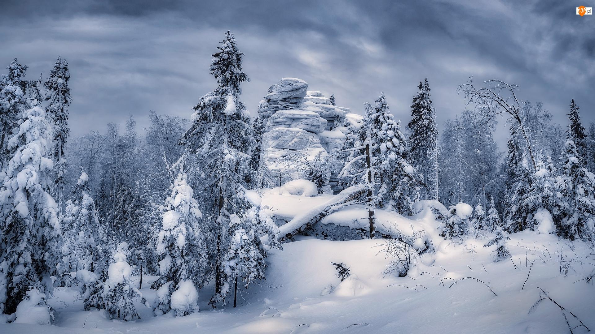 Zima, Skały, Drzewa, Las