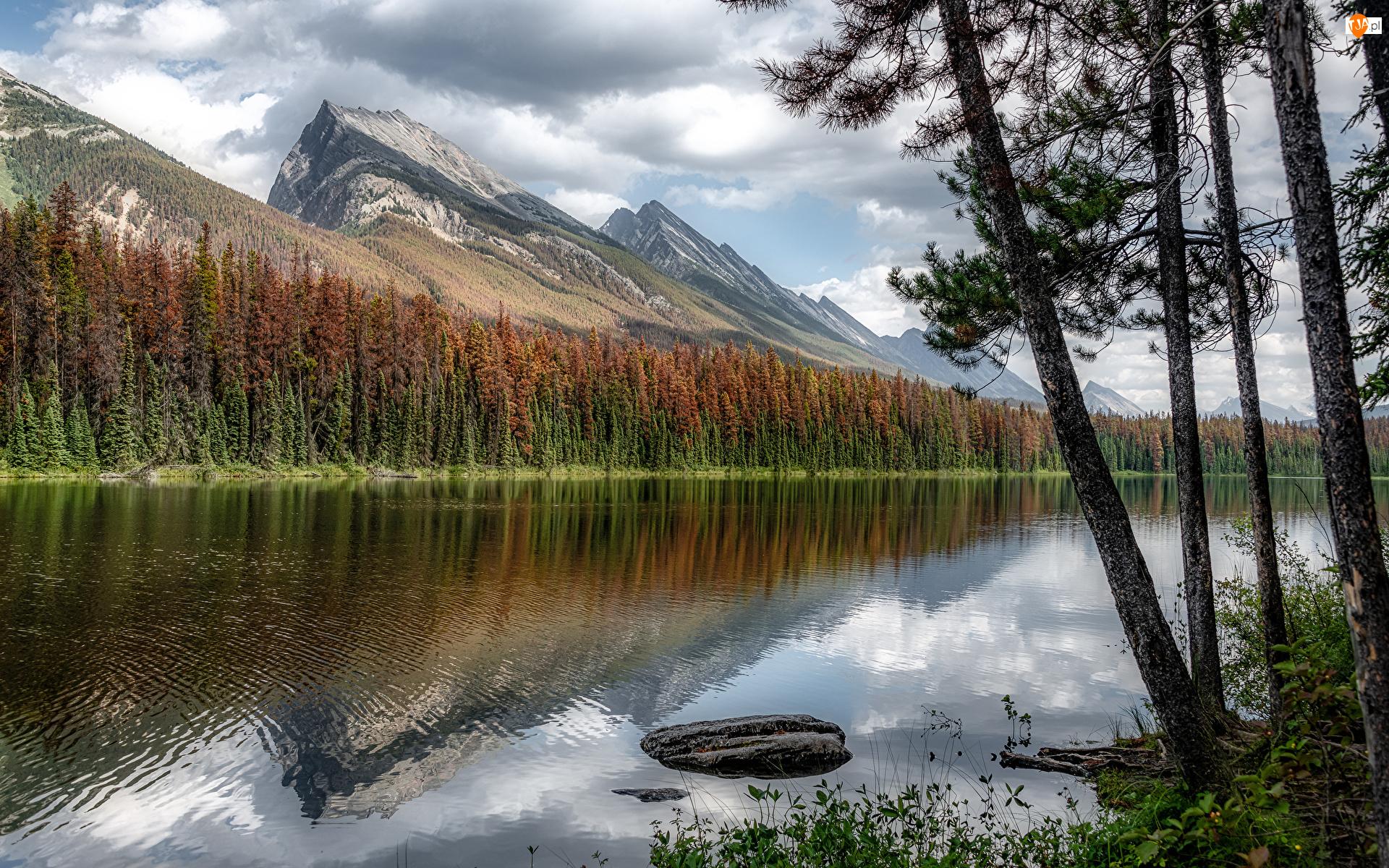 Park Narodowy Jasper, Las, Jezioro, Alberta, Drzewa, Honeymoon Lake, Kanada, Góry