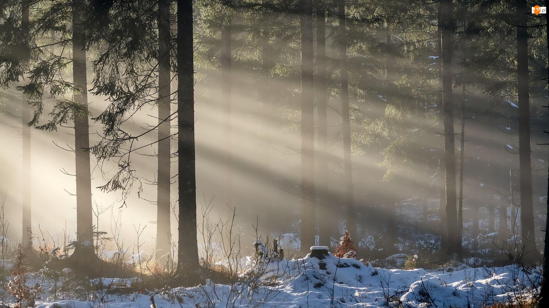 Przebijające Światło, Drzewa, Las, Śnieg