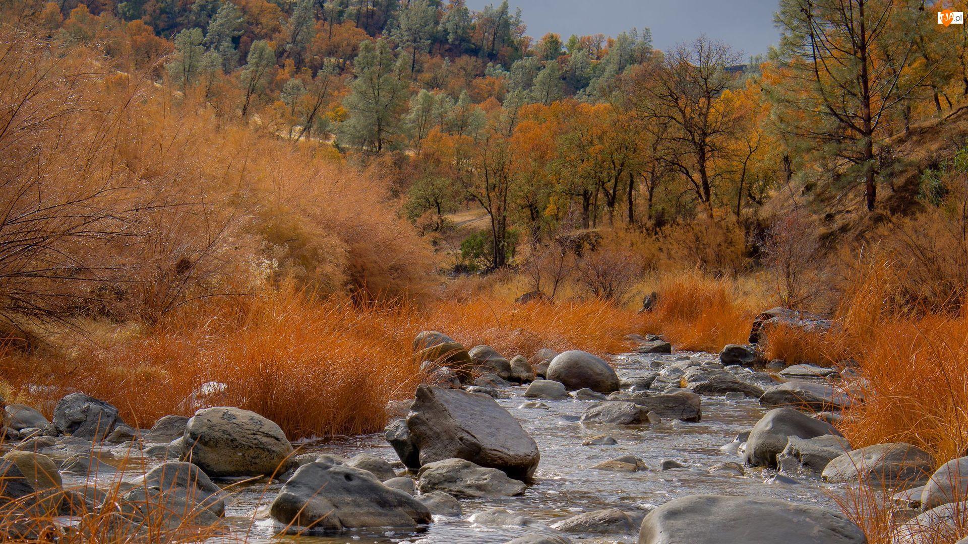 Kamienie, Drzewa, Jesień, Rzeka, Trawa, Krzewy, Pożółkłe