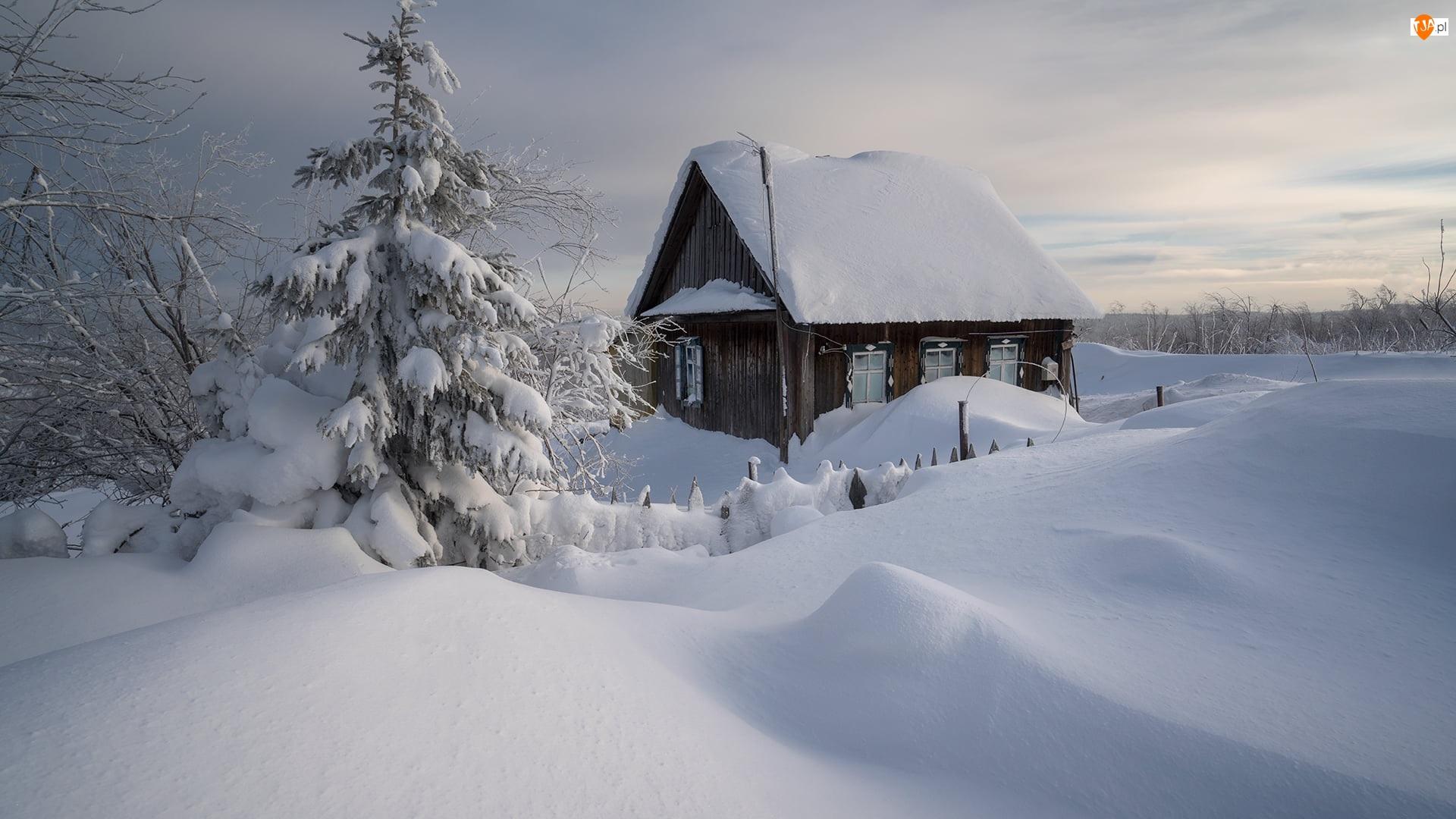 Zaspy, Zima, Dom, Drzewa