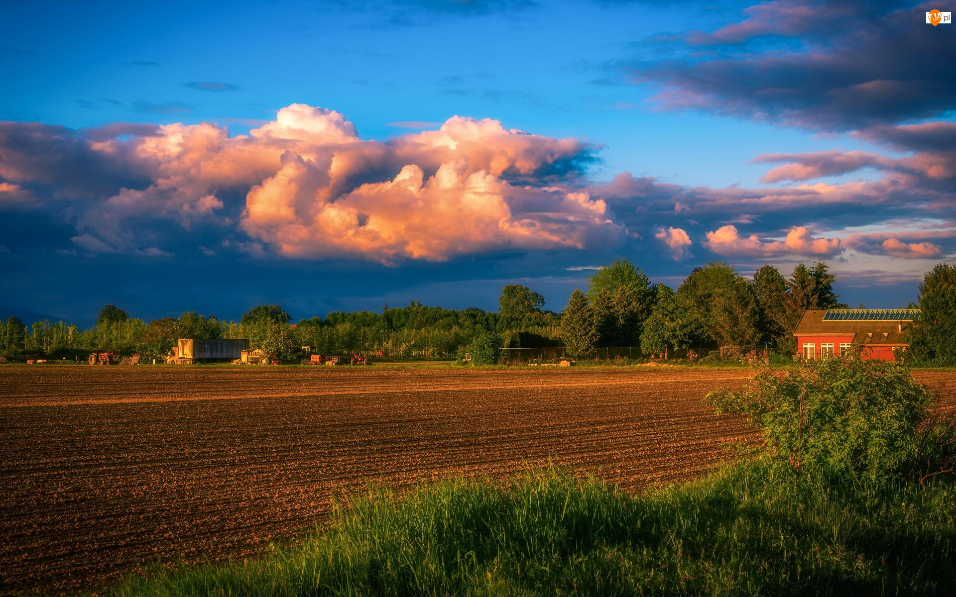 Drzewa, Chmury, Pole, Domy, Niebo
