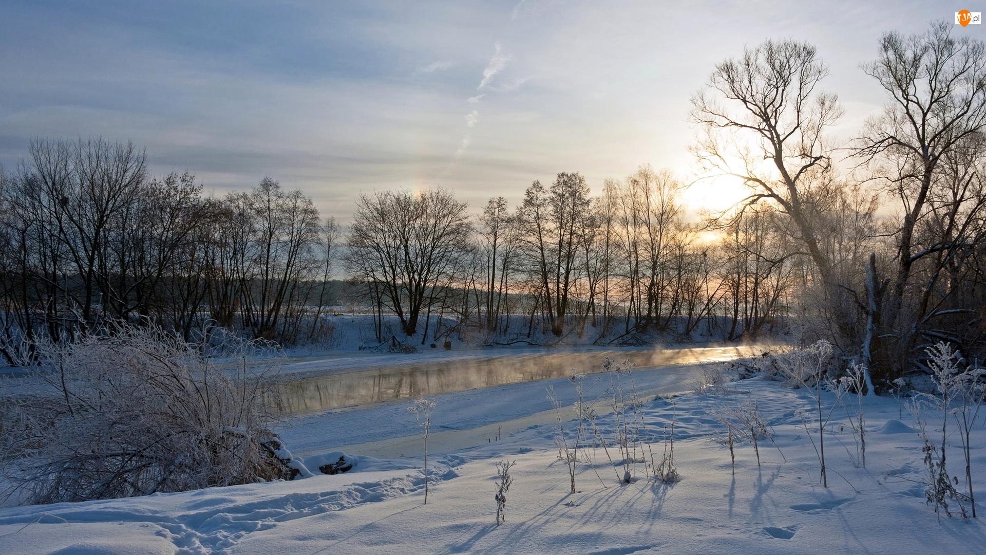 Drzewa, Śnieg, Rzeka, Zima, Krzewy