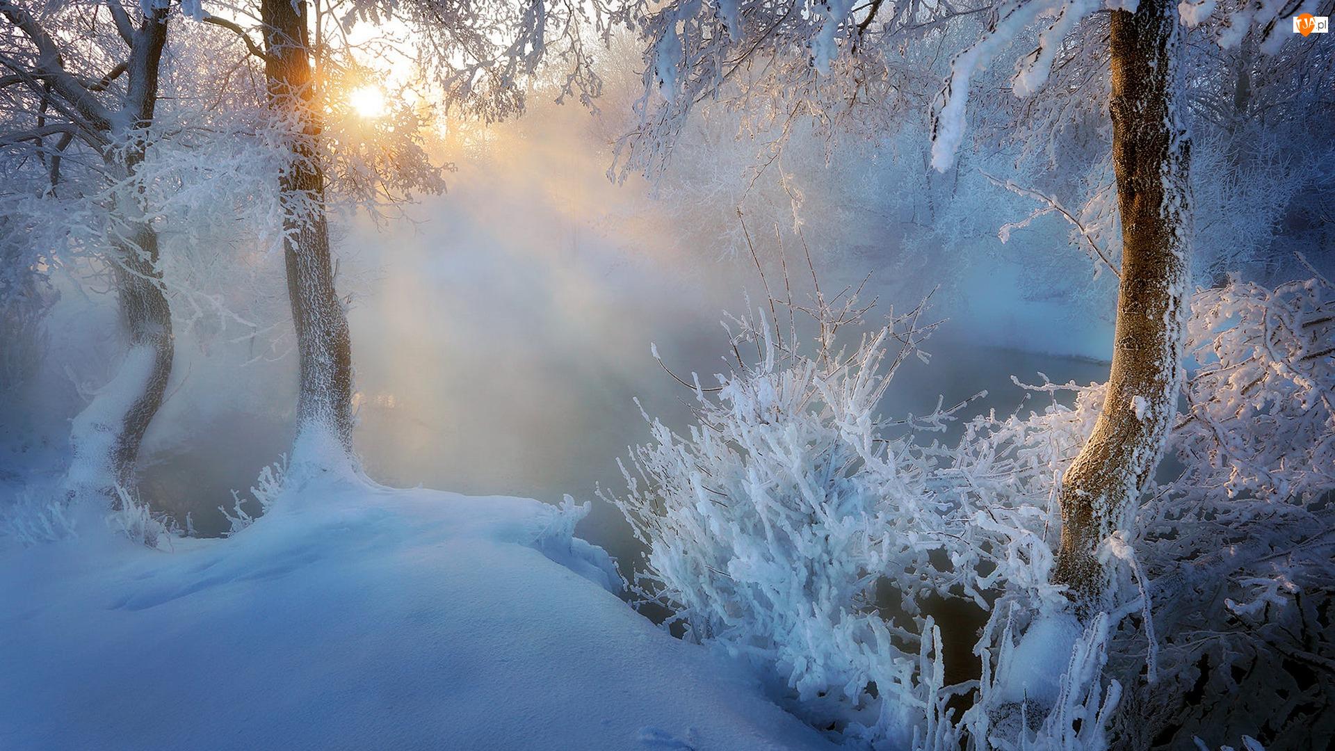Drzewa, Krzewy, Promienie słońca, Zima, Mgła, Rzeka, Śnieg