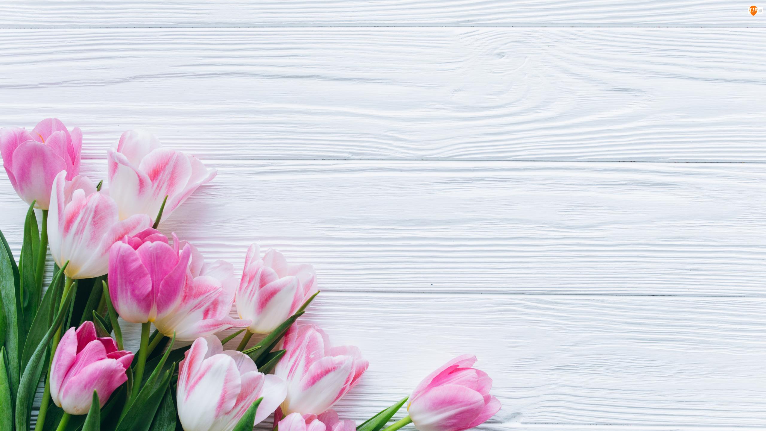Tulipany, Deski, Biało-różowe, Kwiaty, Białe
