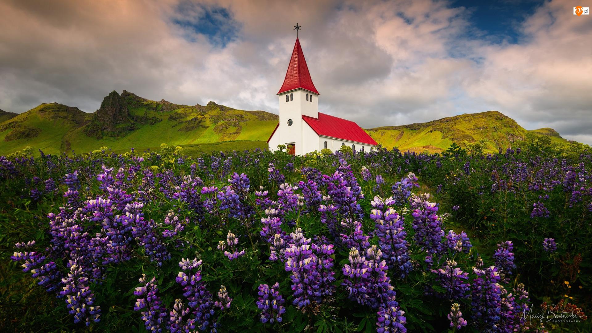 Miejscowość Vik i Myrdal, Kościół, Zielone, Gmina Myrdalshreppur, Łąka, Góry, Islandia, Łubin