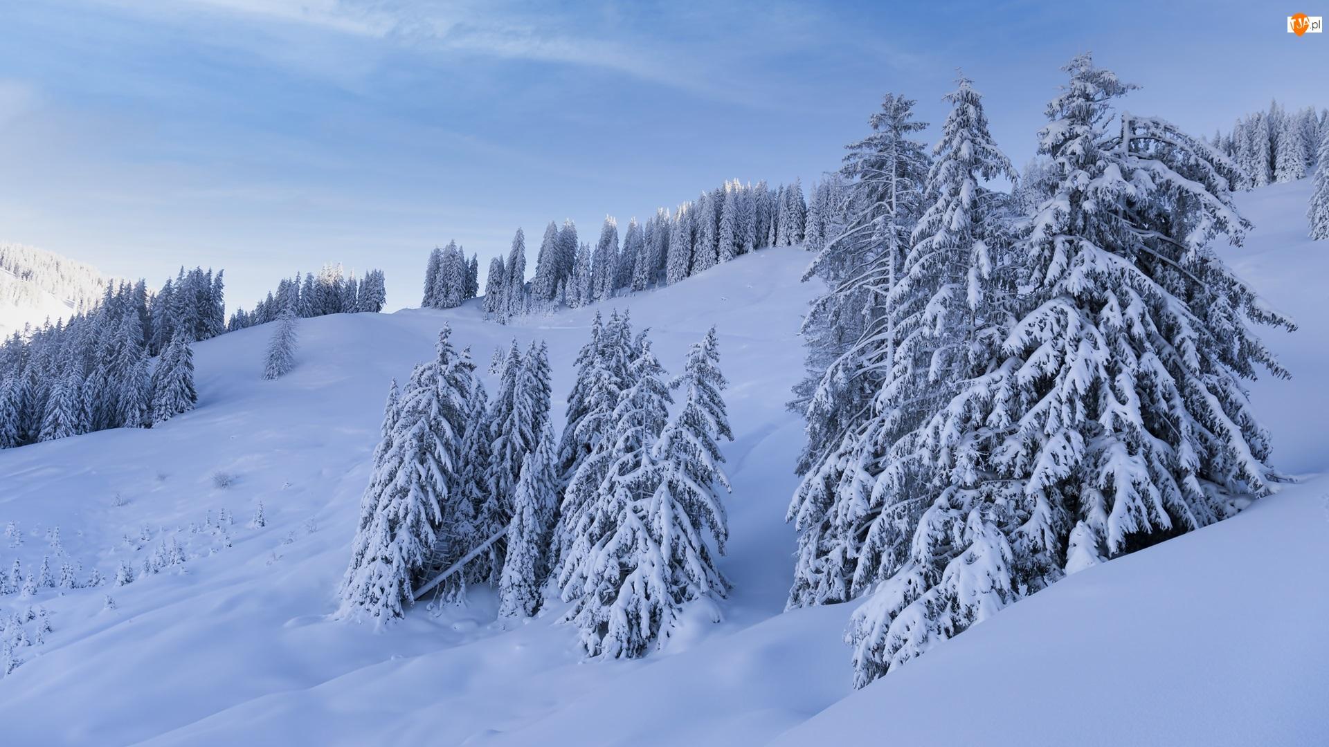 Zbocze, Drzewa, Góry, Zima, Ośnieżone