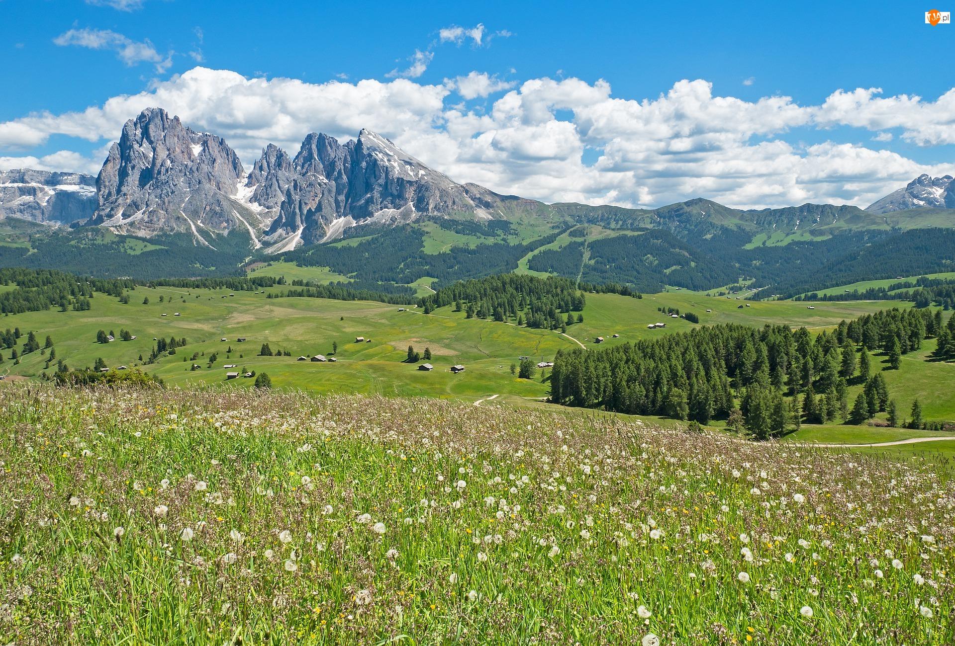 Włochy, Drzewa, Dolomity, Płaskowyż Seiser Alm, Góry Sassolungo, Lato, Domy, Łąka, Dolina Val Gardena