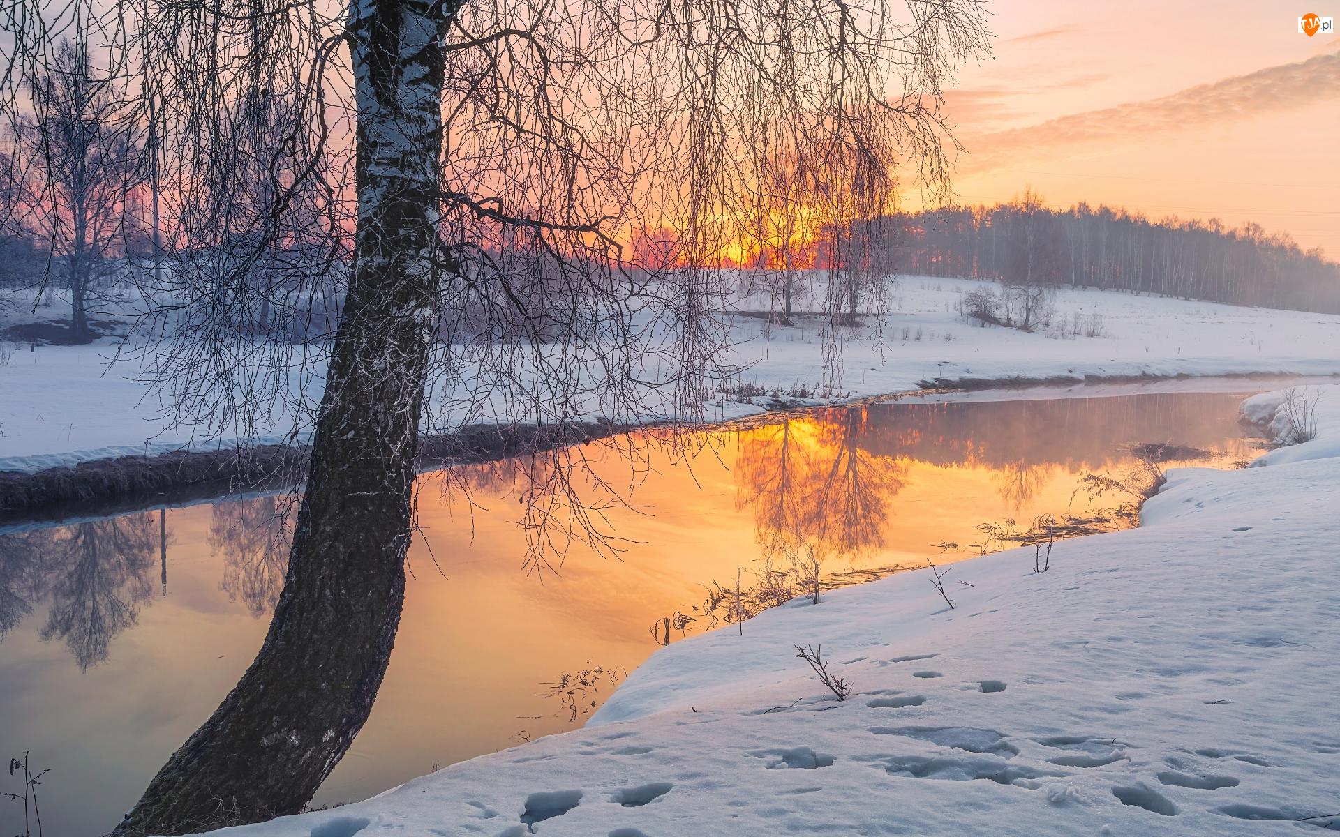 Drzewo, Zachód słońca, Rzeka, Zima, Brzoza