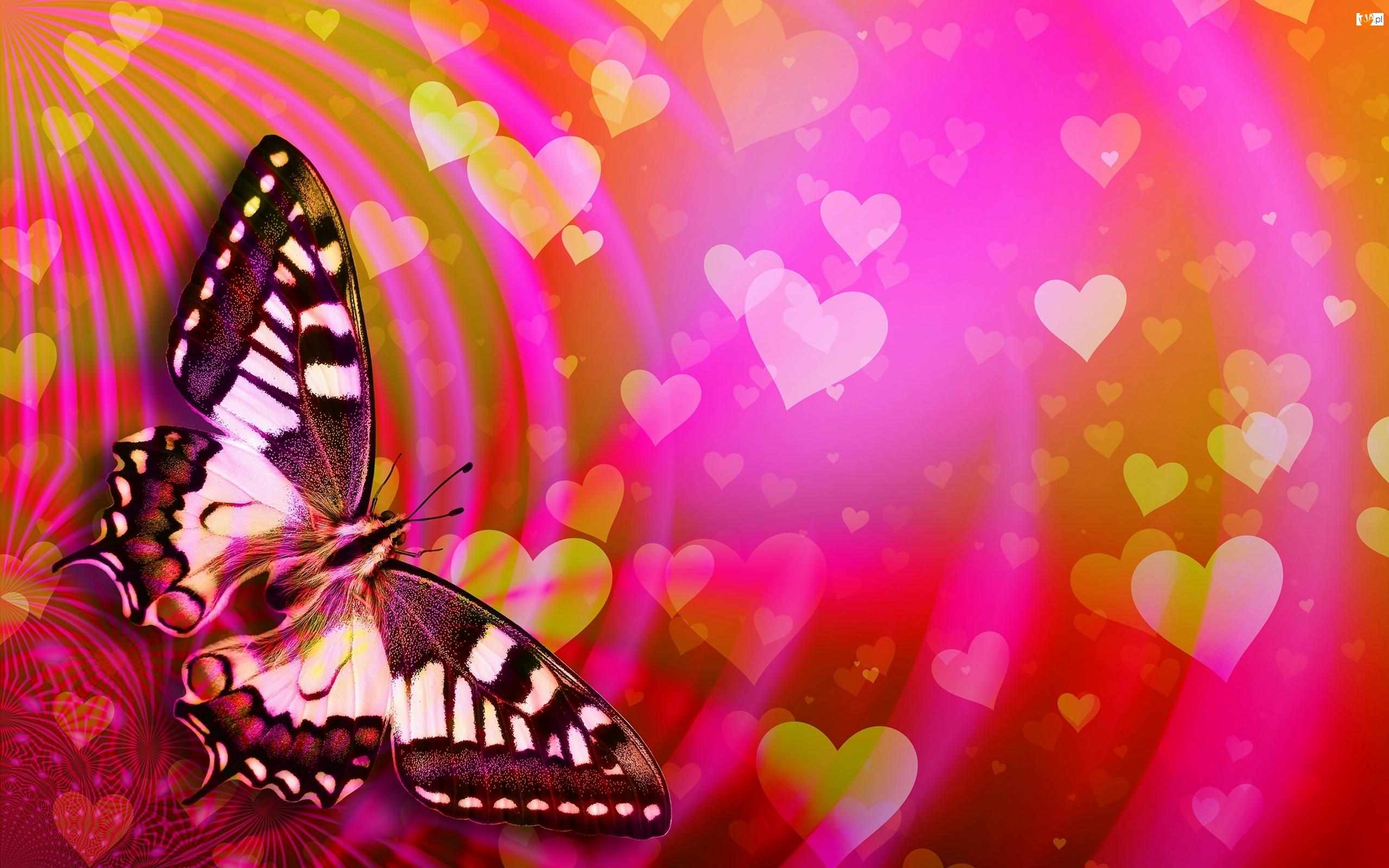 Grafika, Motyl, Paź królowej, Serduszka