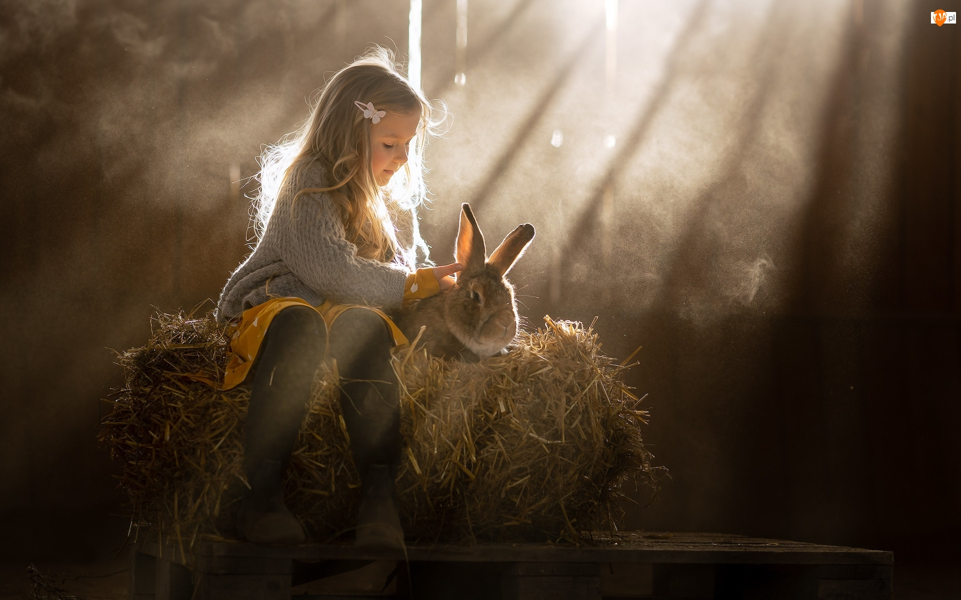 Promienie słońca, Dziewczynka, Królik