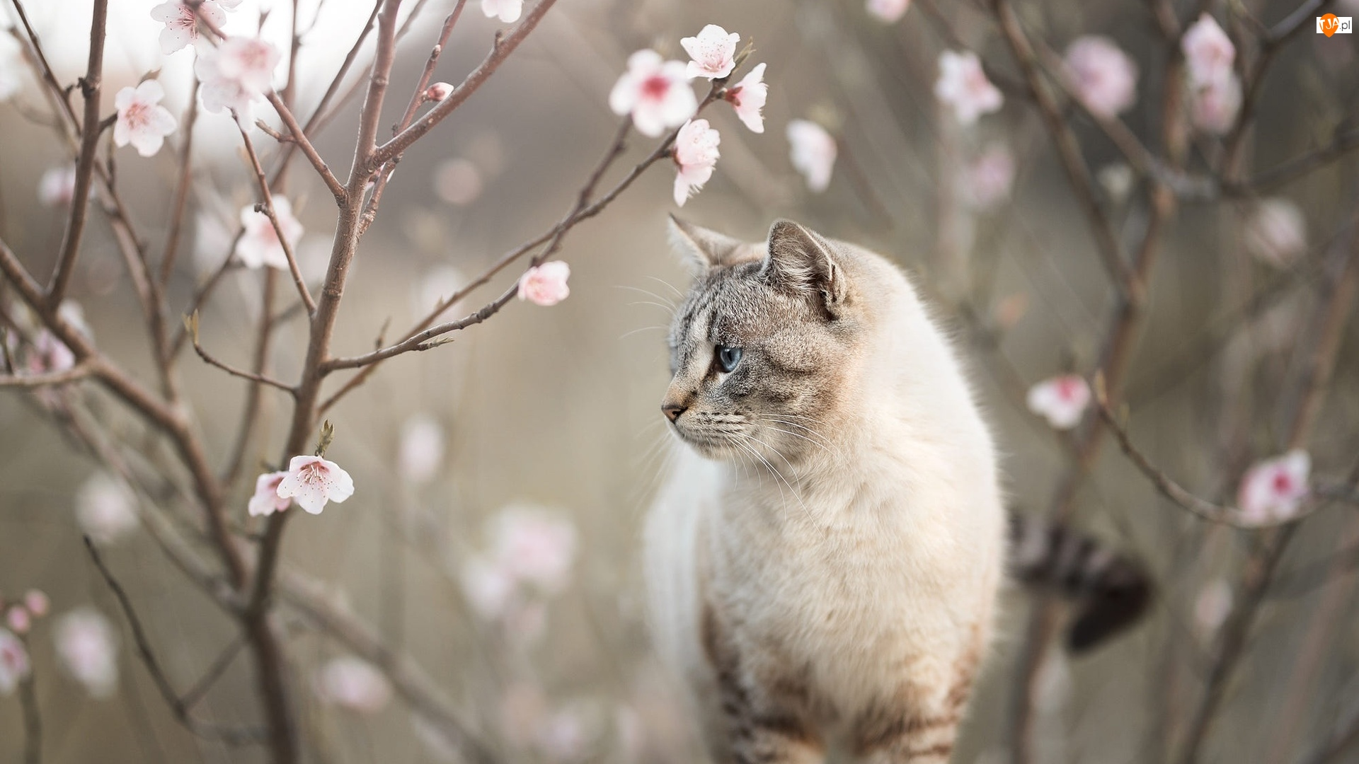 Gałązki, Kot, Okwiecone
