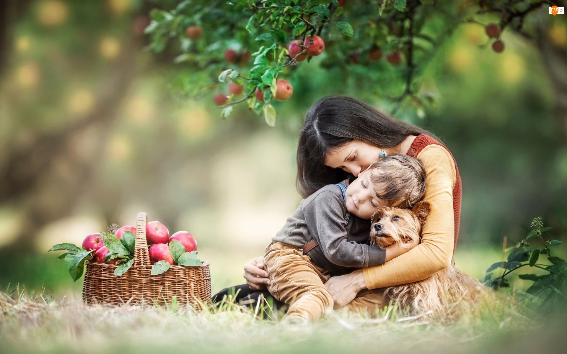 Dziecko, Kobieta, Koszyk, Jabłoń, Pies, Jabłka