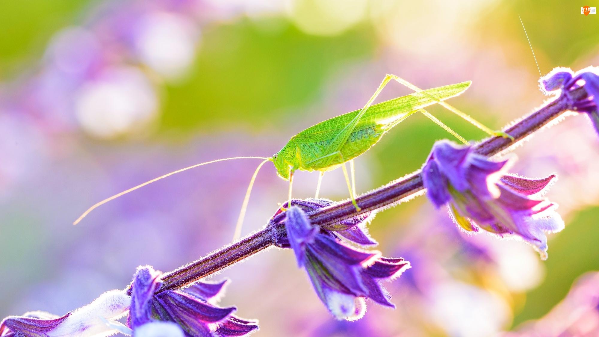 Makro, Pasikonik zielony, Roślinka