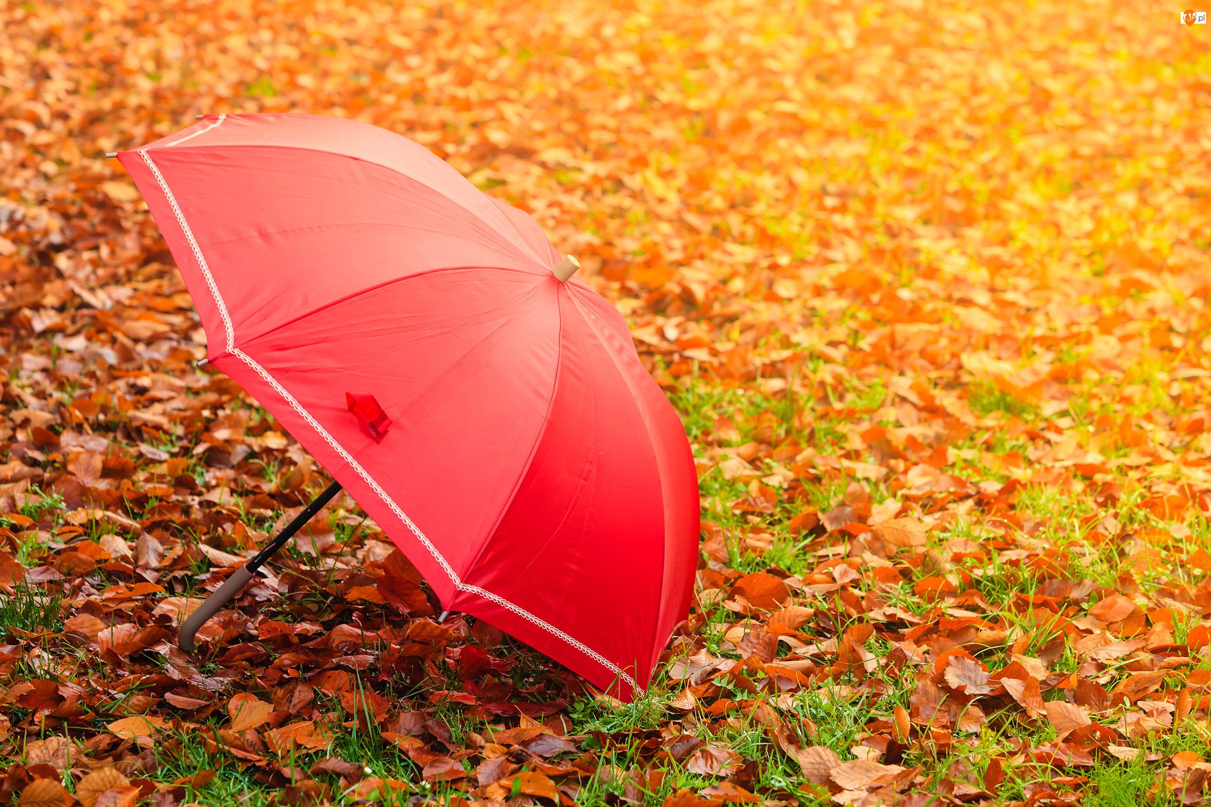 Pożółkłe, Liście, Parasolka, Czerwona, Opadłe