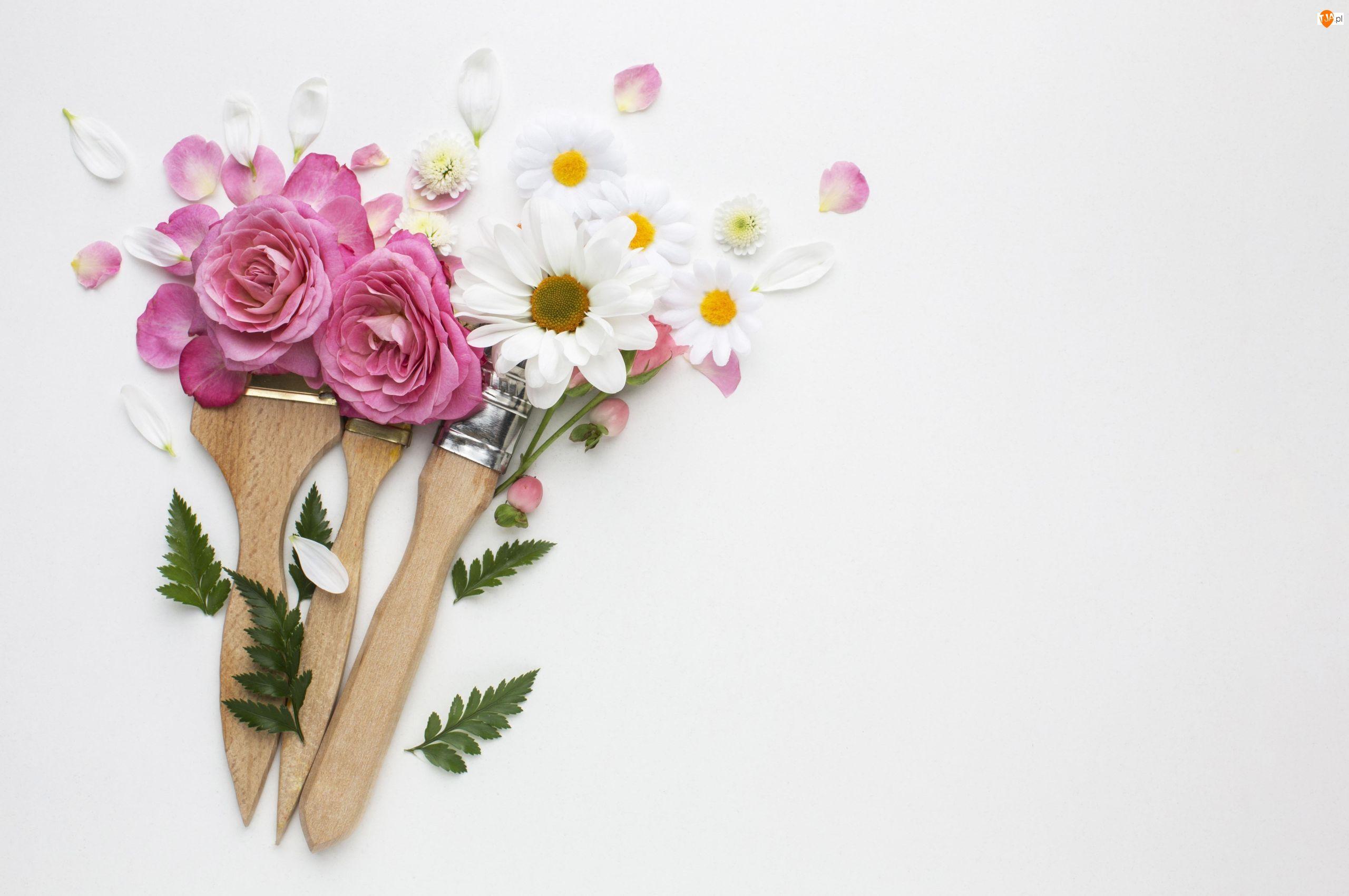 Róże, Kwiaty, Pędzle, Tło, Chryzantemy, Białe