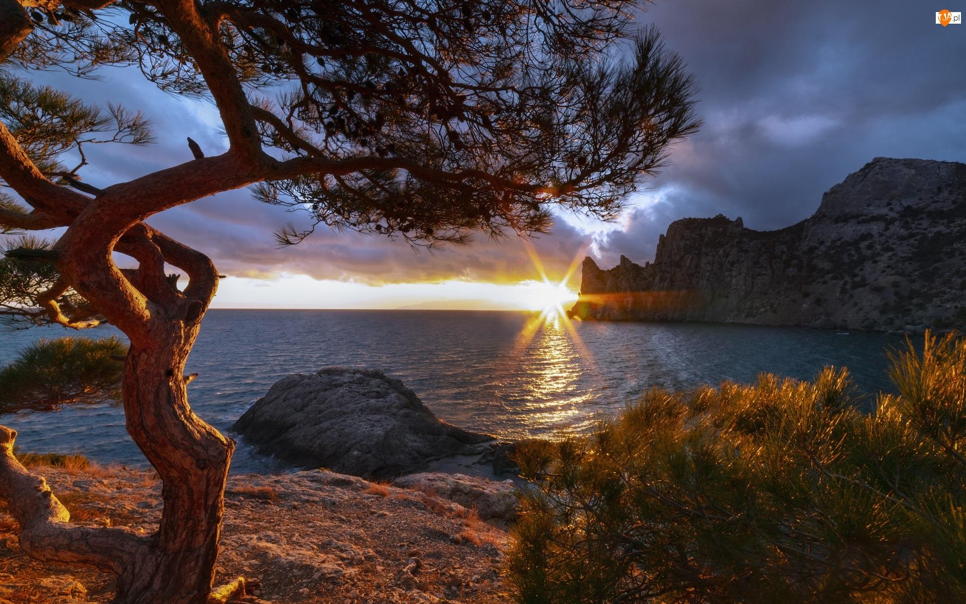 Drzewo, Morze Czarne, Wybrzeże, Sosna, Promienie słońca, Skały, Krym, Chmury