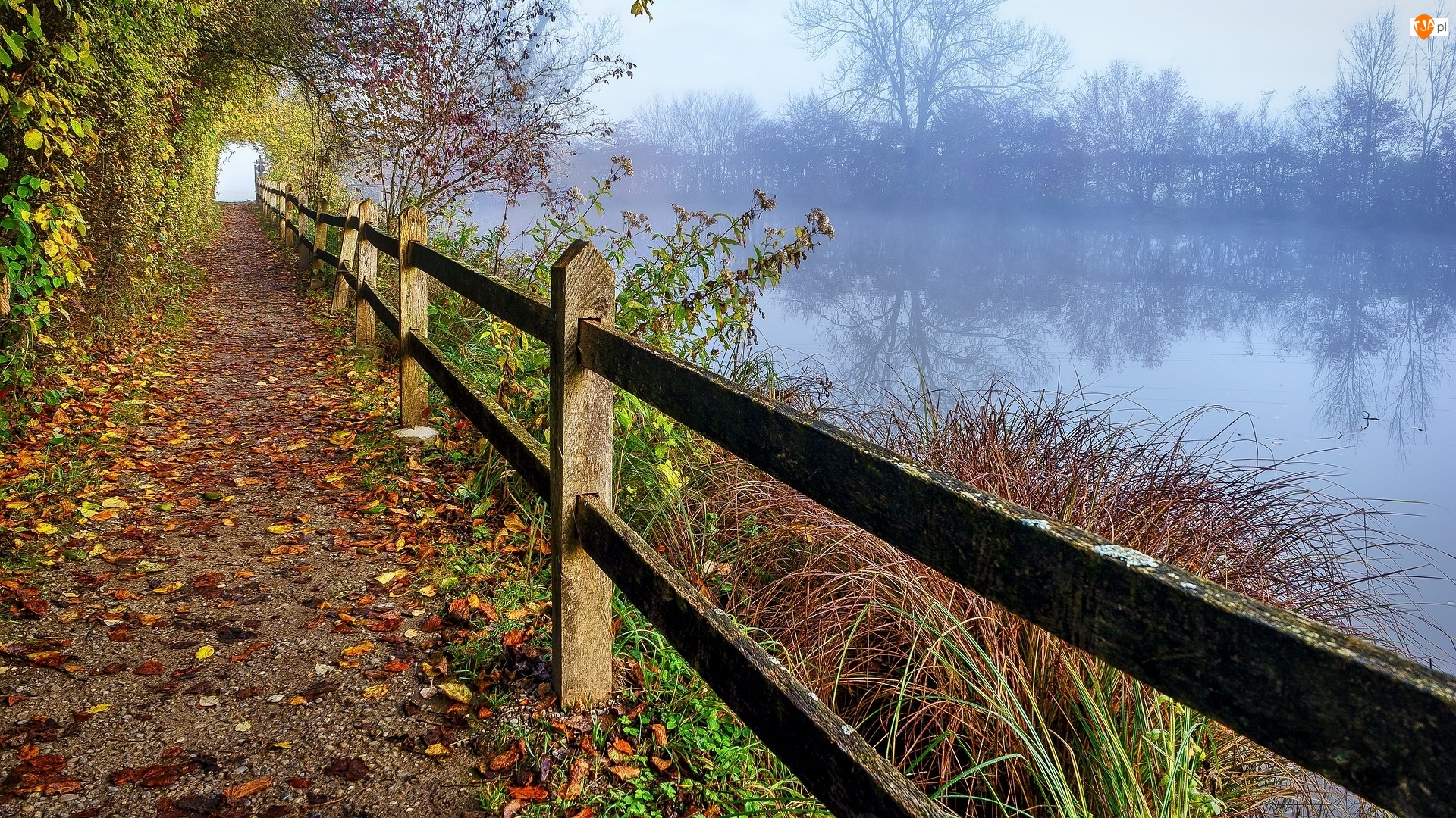 Ogrodzenie, Rośliny, Droga, Jezioro, Drzewa