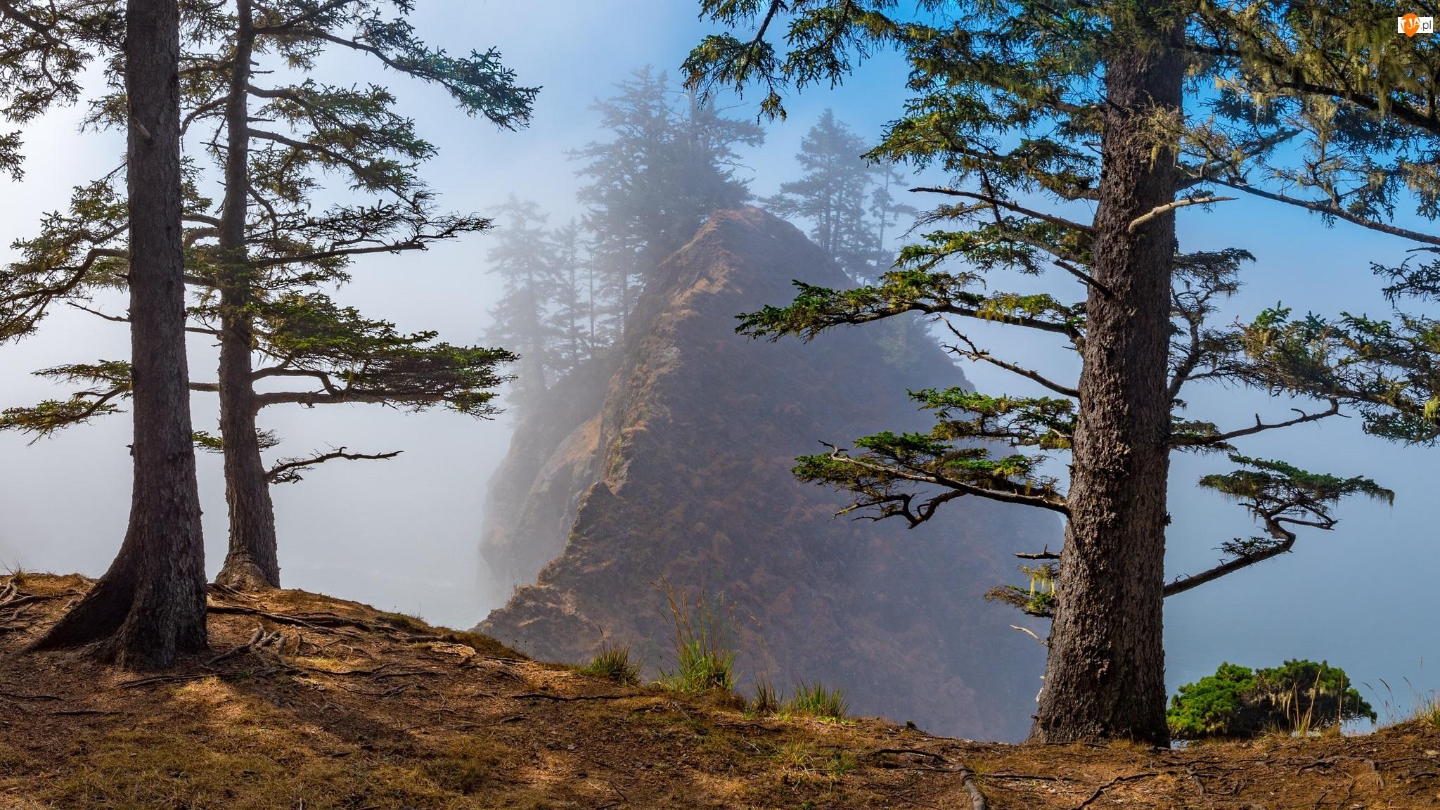 Mgła, Drzewa, Sosny, Skała