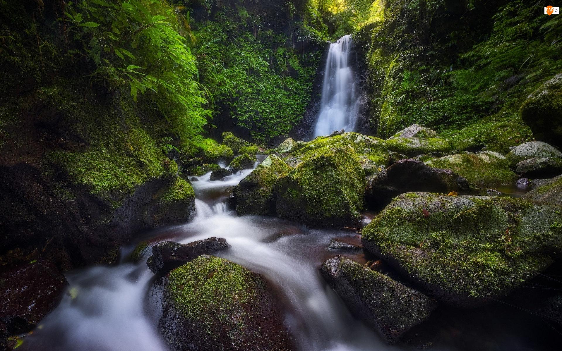 Omszałe, Toolona Creek, Park Narodowy Lamington, Rzeka, Queensland, Australia, Wodospad, Las, Gwongurai Falls, Kamienie