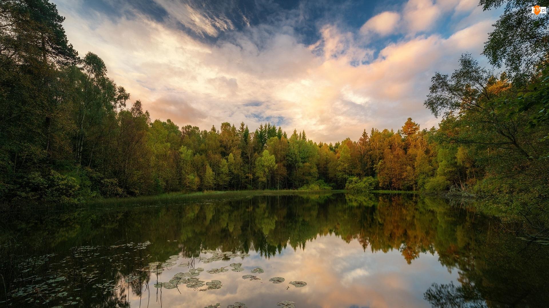 Las, Chmury, Zielony, Jezioro, Drzewa