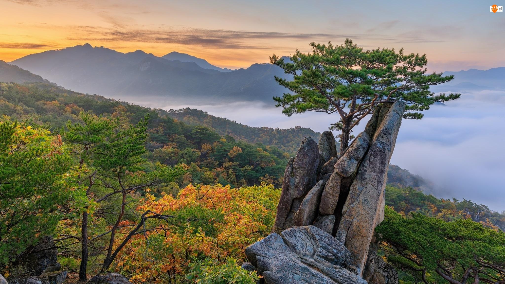 Góry, Skały, Sosna, Wschód słońca, Drzewo, Chmury, Mgła