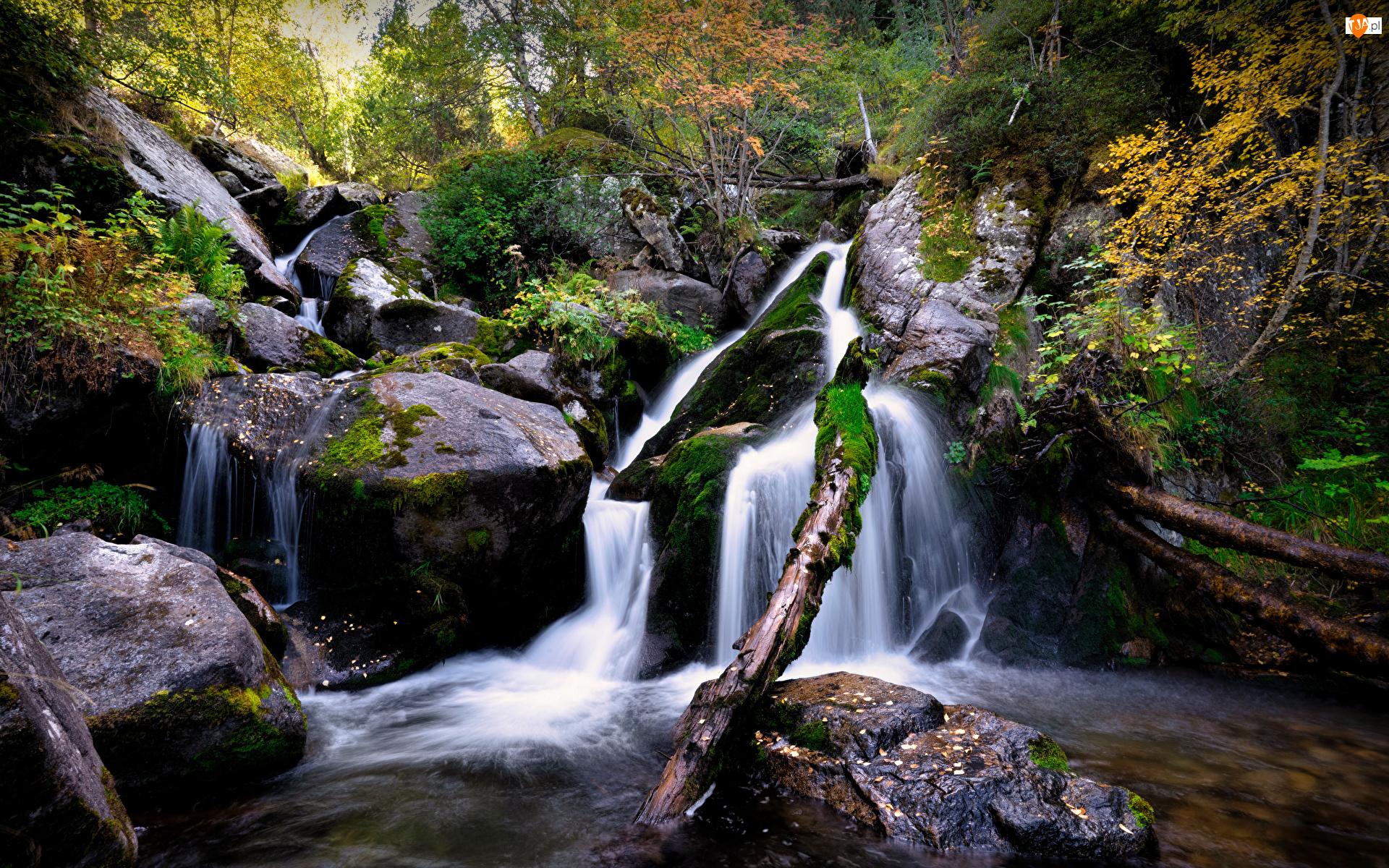 Kamienie, Drzewa, Rzeka, Omszone
