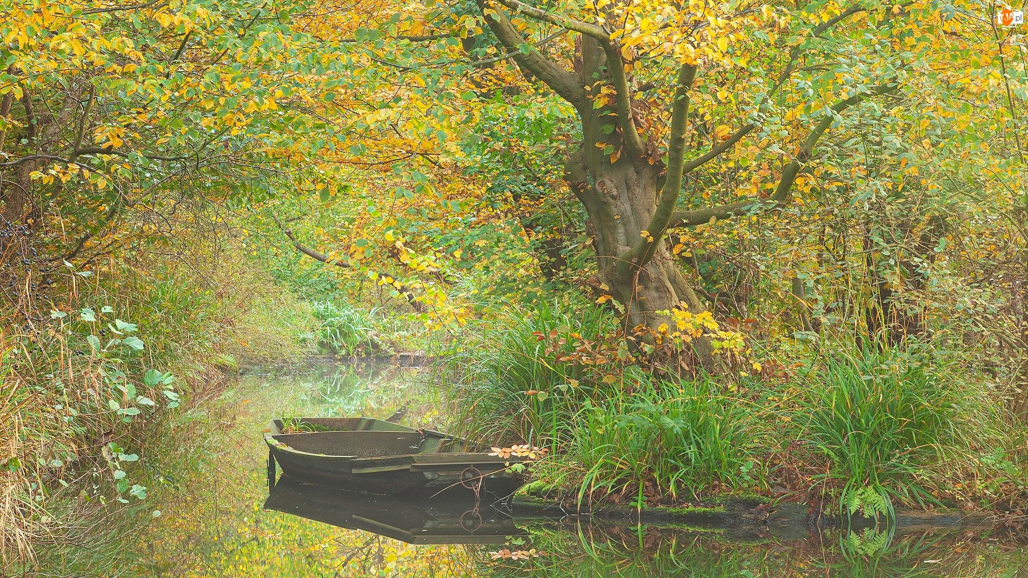 Rośliny, Rzeka, Łódka, Drzewa